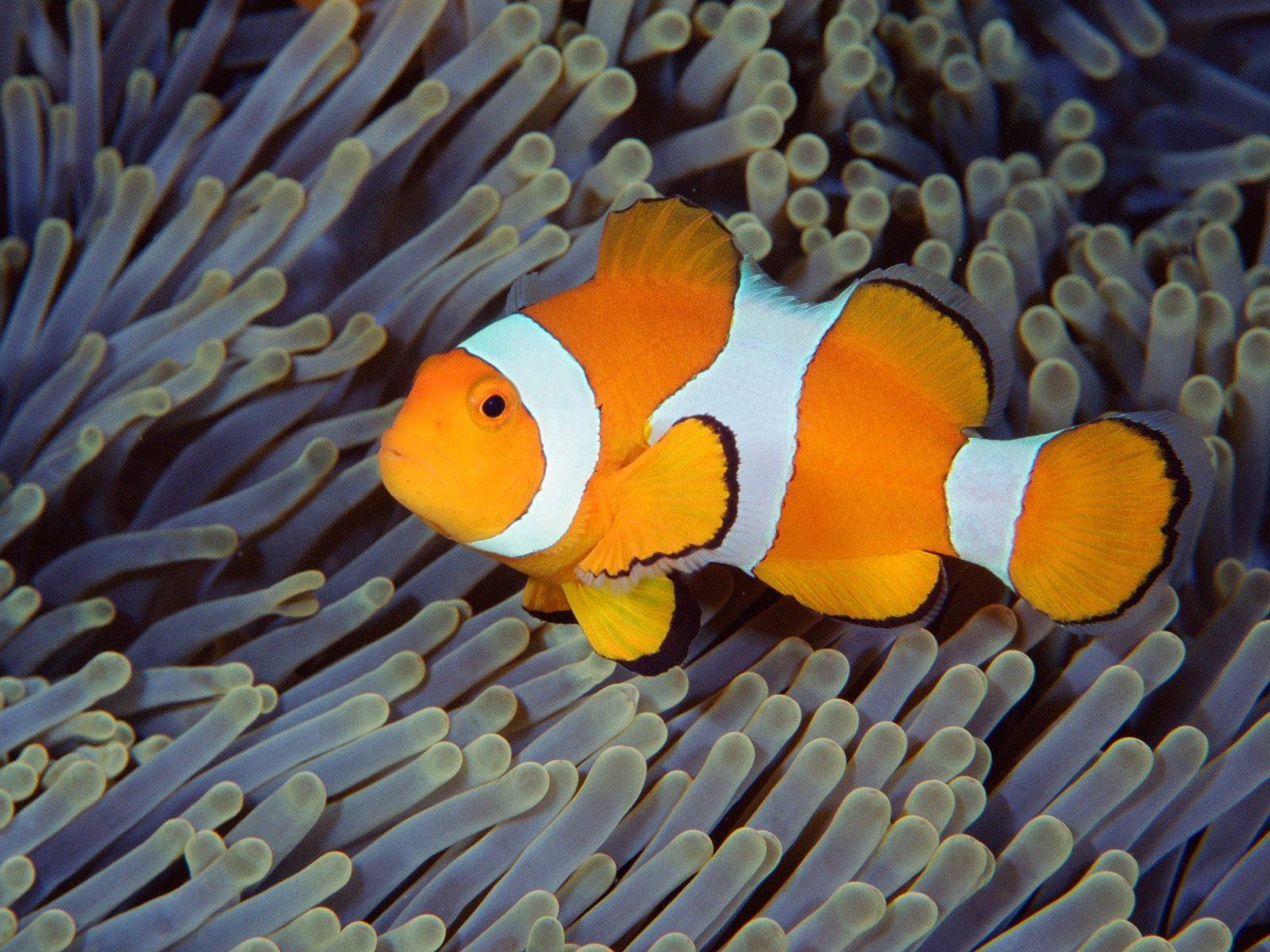 показать картинки рыб мандалорце