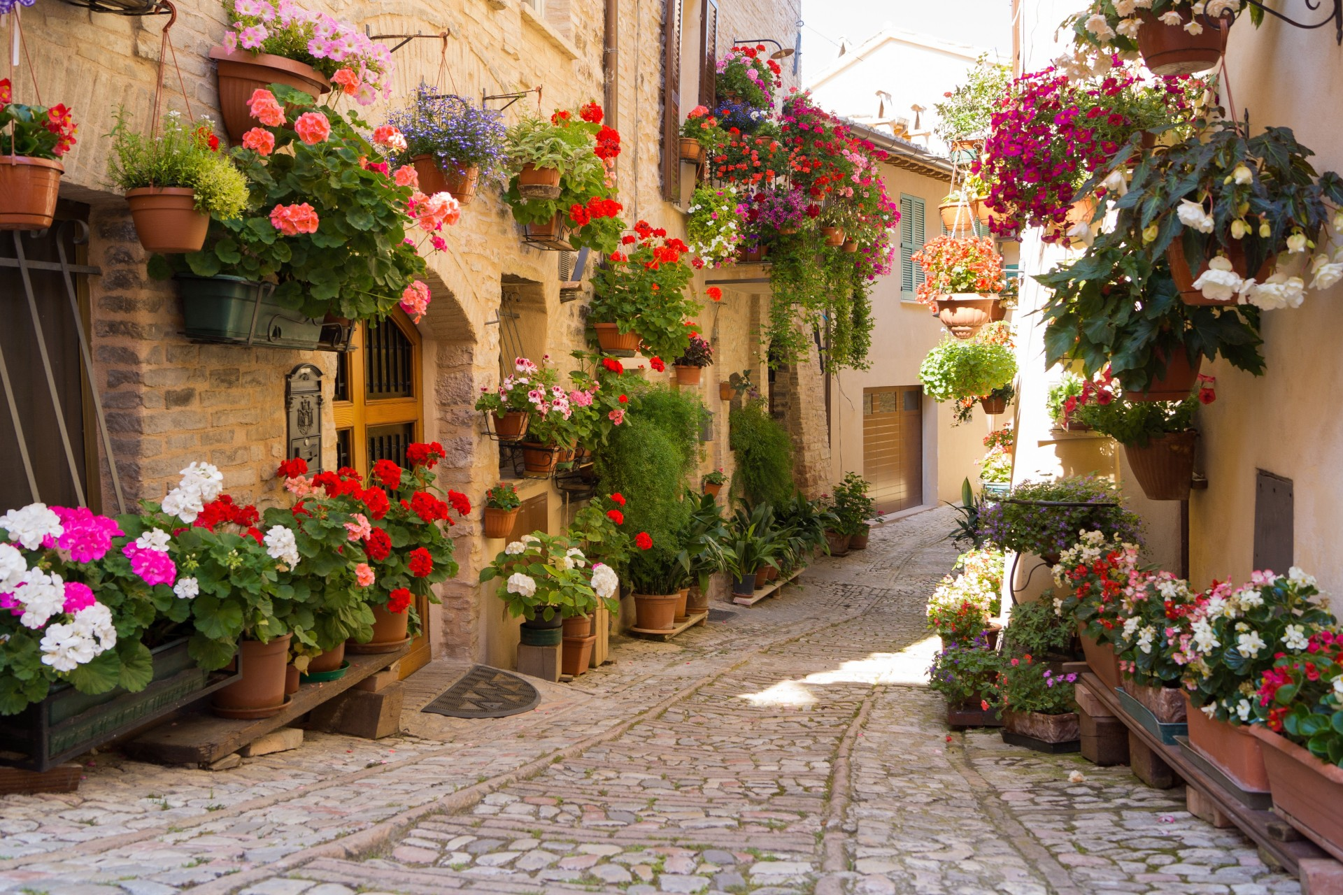 Греция цветы фото
