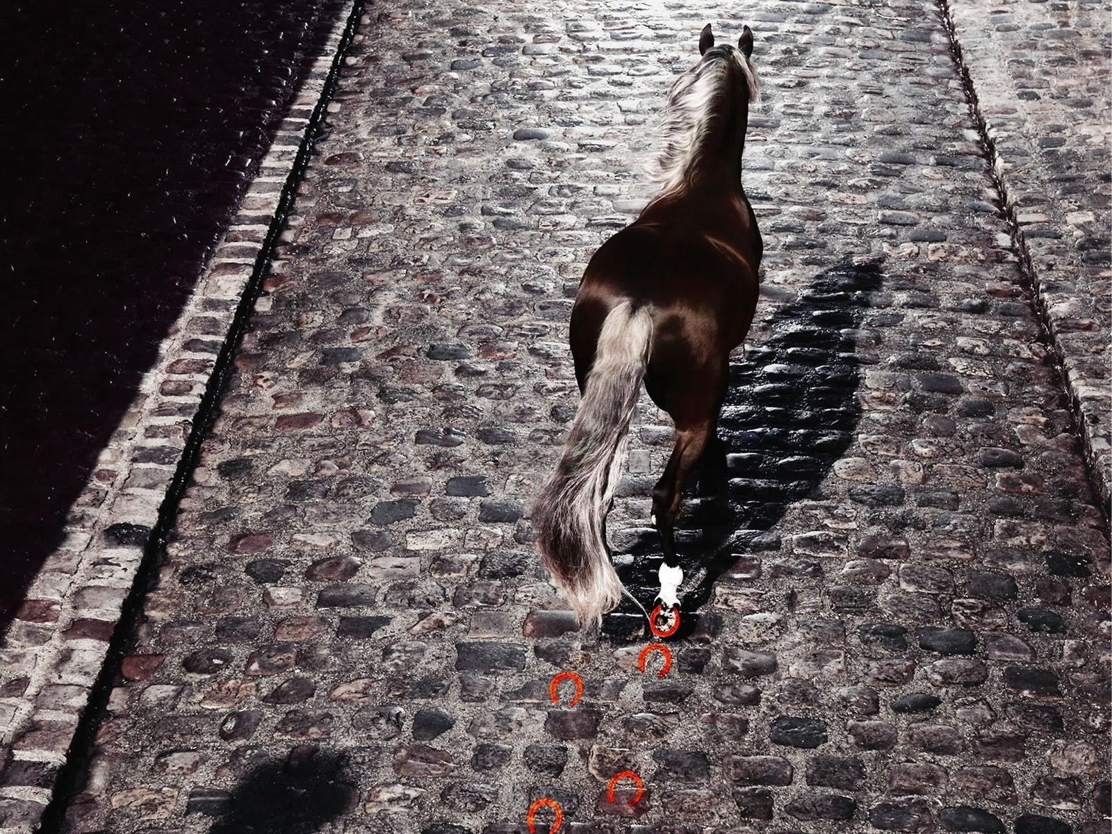 Лошадь части креатив бесплатно
