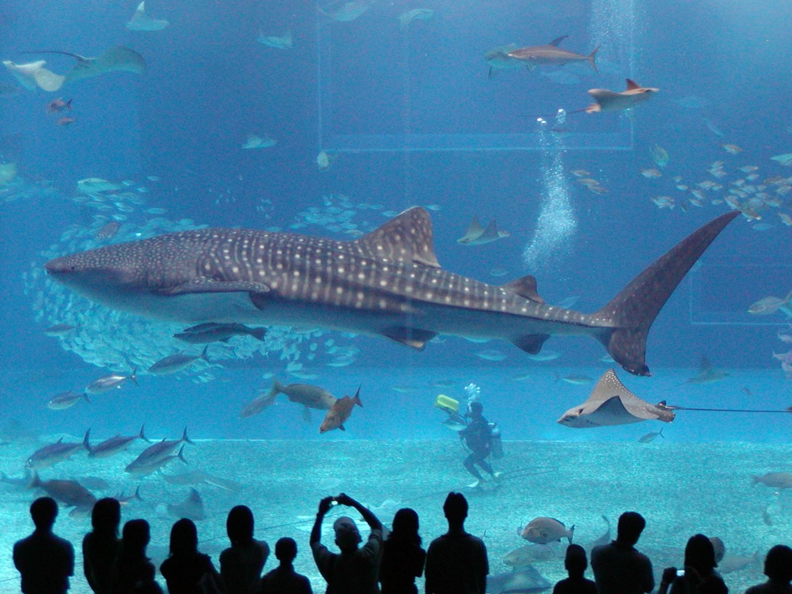 живой аквариум для рабочего стола живые обои