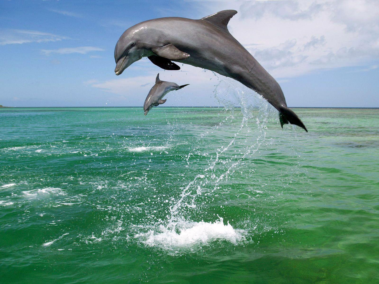 Delphin Pictures