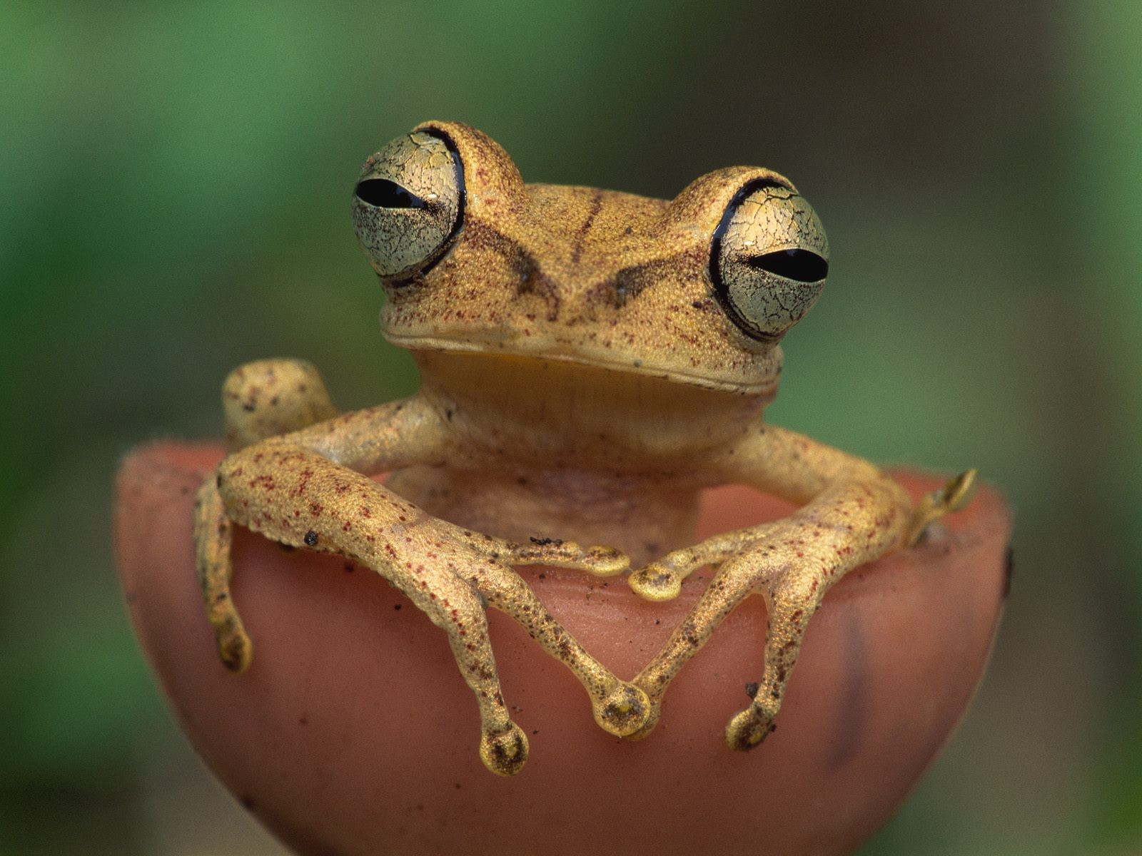 занимается картинки на телефон с жабами называется