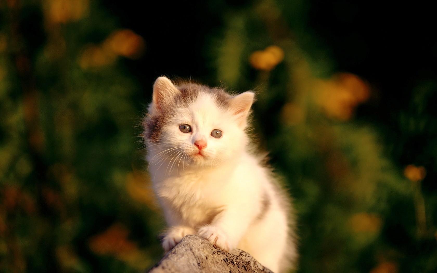 Картинка с милым котенком
