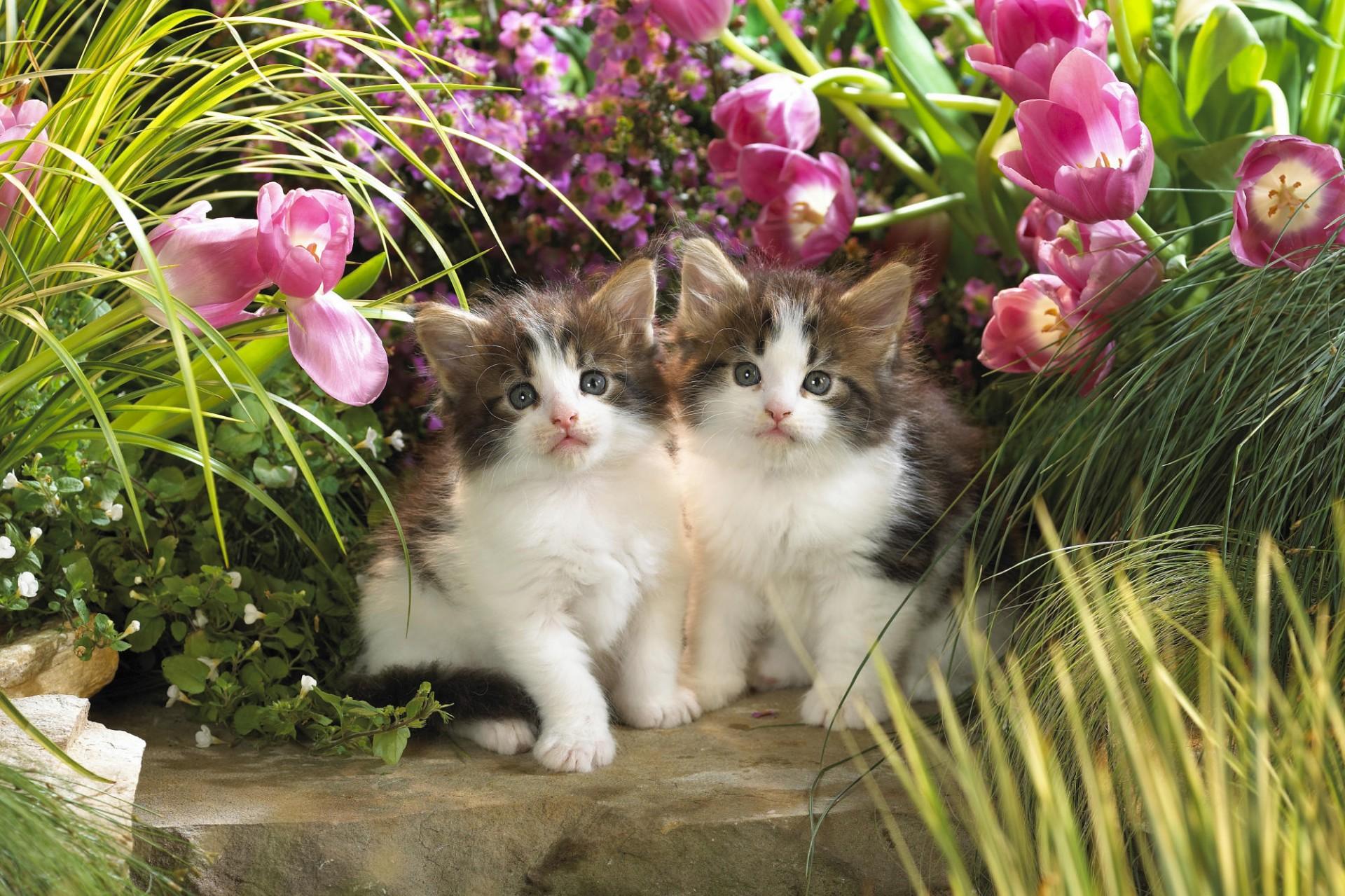 Картинки кошки на фоне цветов