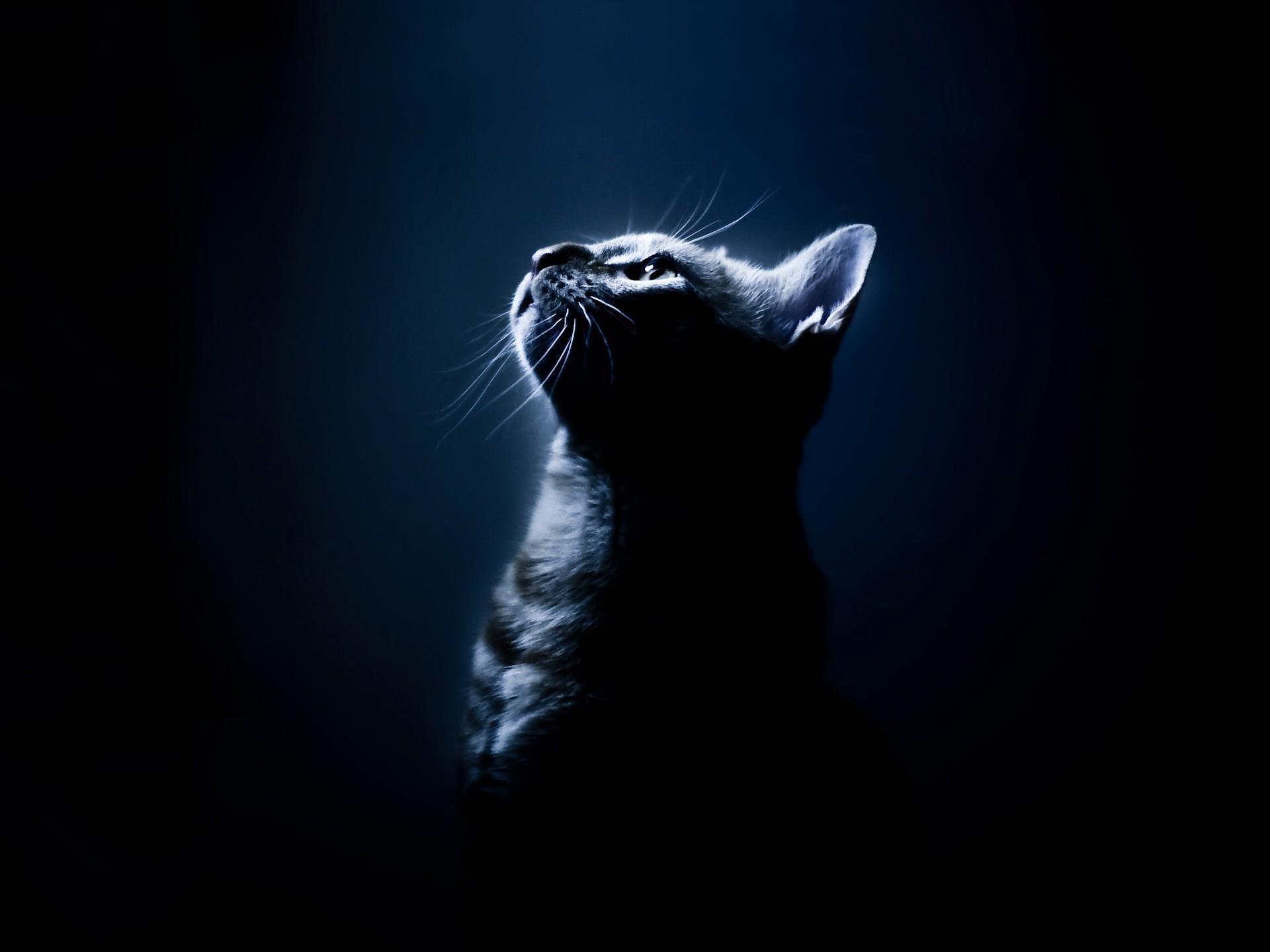 Котенок смотрящий вверх бесплатно