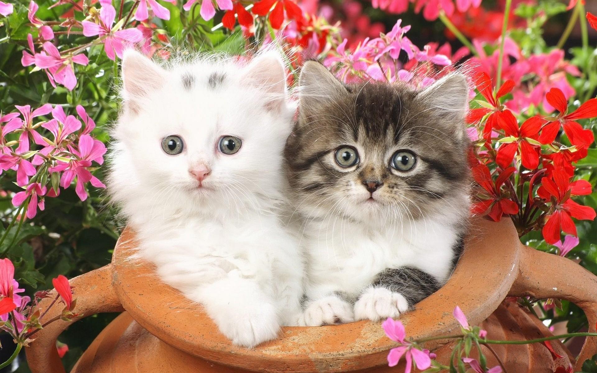 природа животные котята коты  № 1999775 загрузить