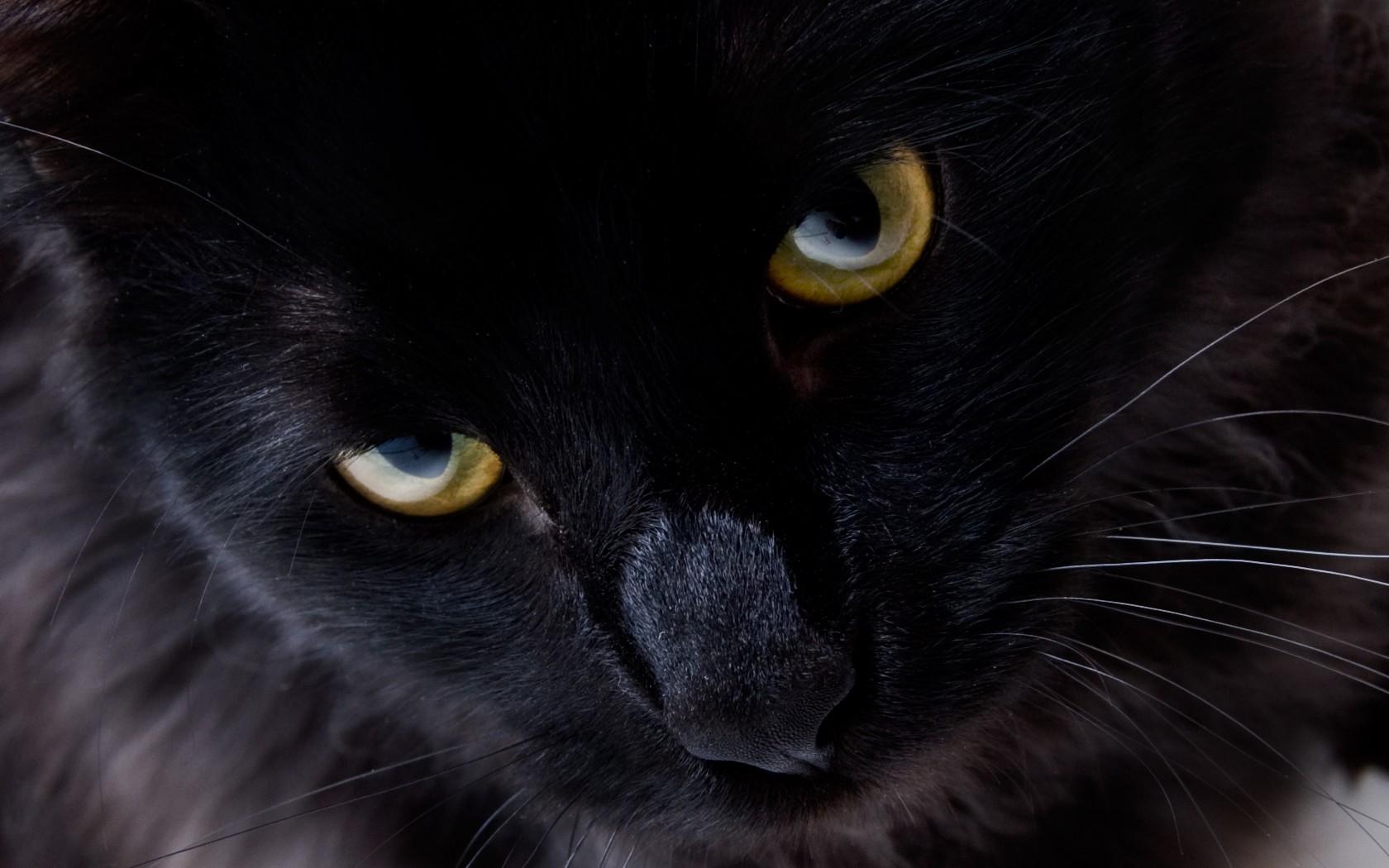 Для, картинка с черной кошкой