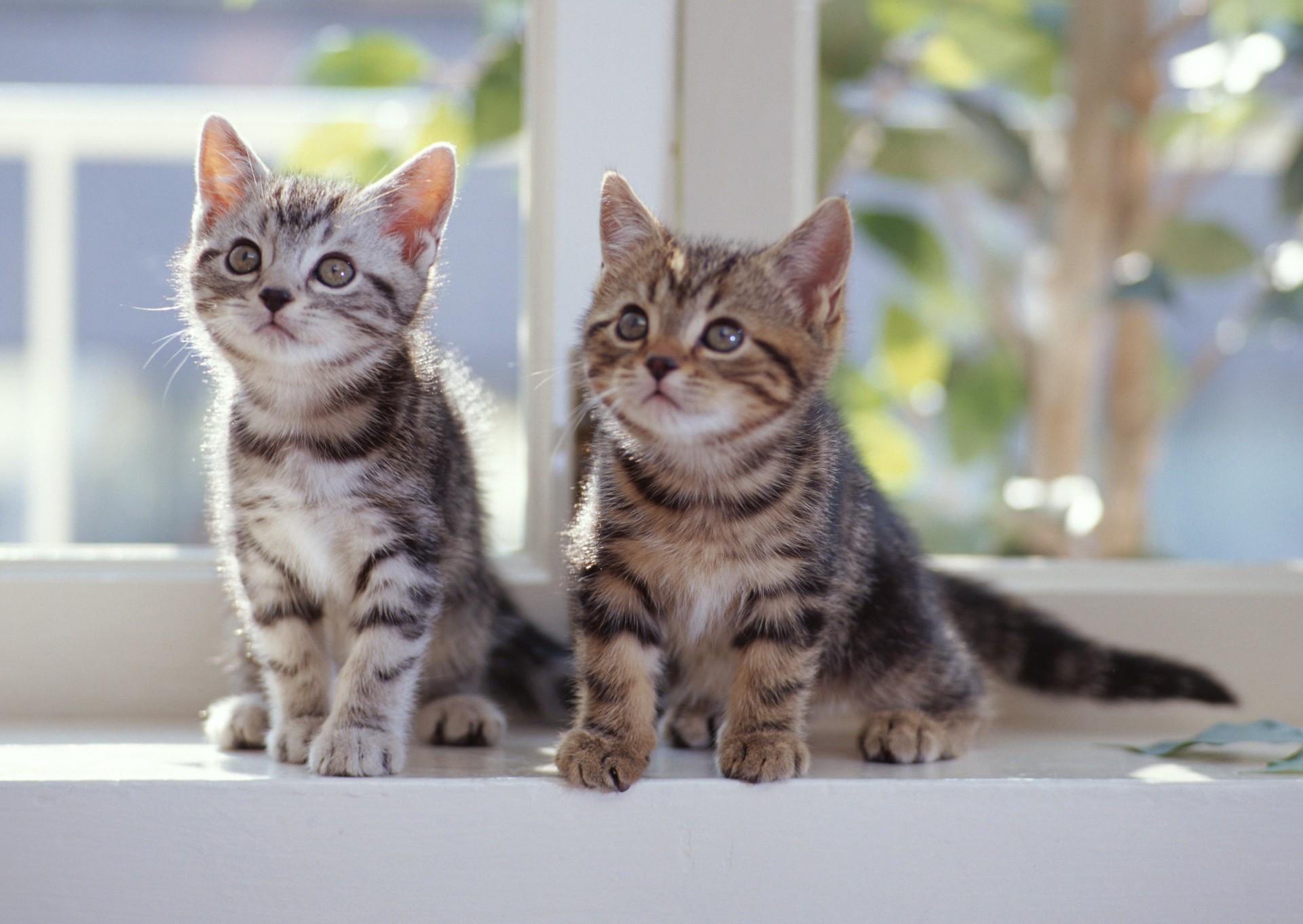 Картинка, картинки с кошками с котятами