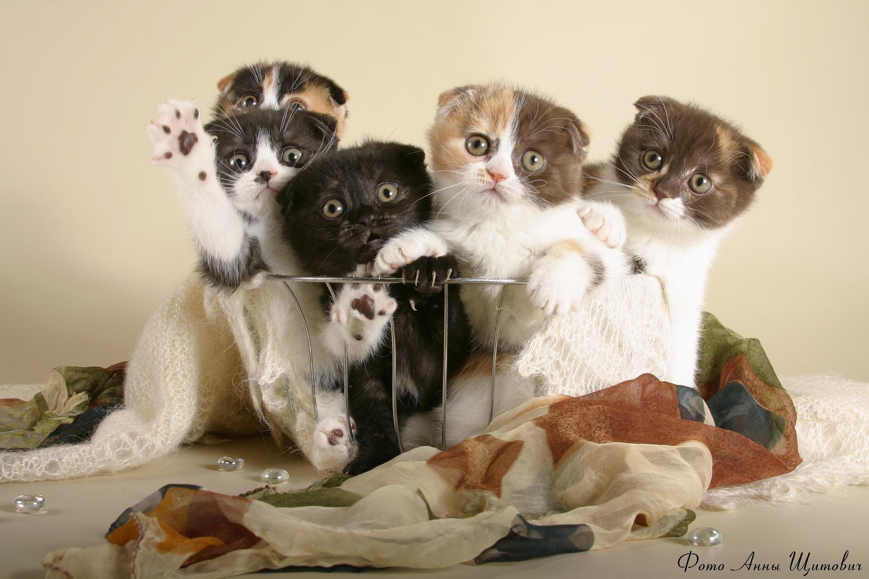 Картинки смешные коты кошки и котята, цветной