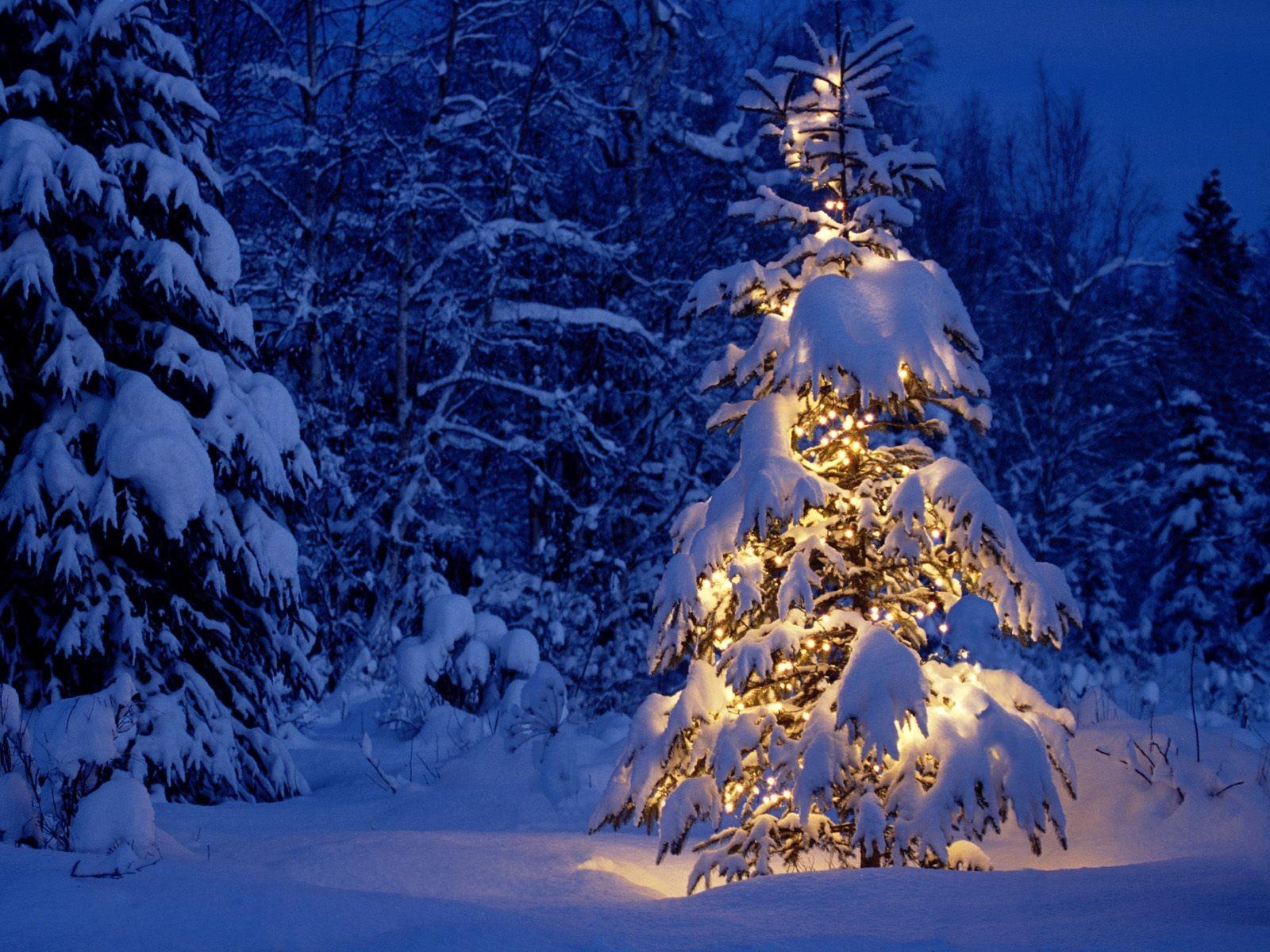 Зимний новогодний лес на открытках