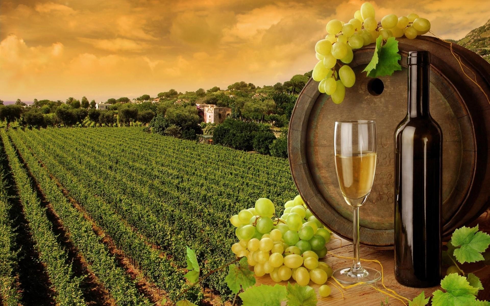 Обои Бутылки, бочки, виноградники, виноград, вино. Разное foto 6