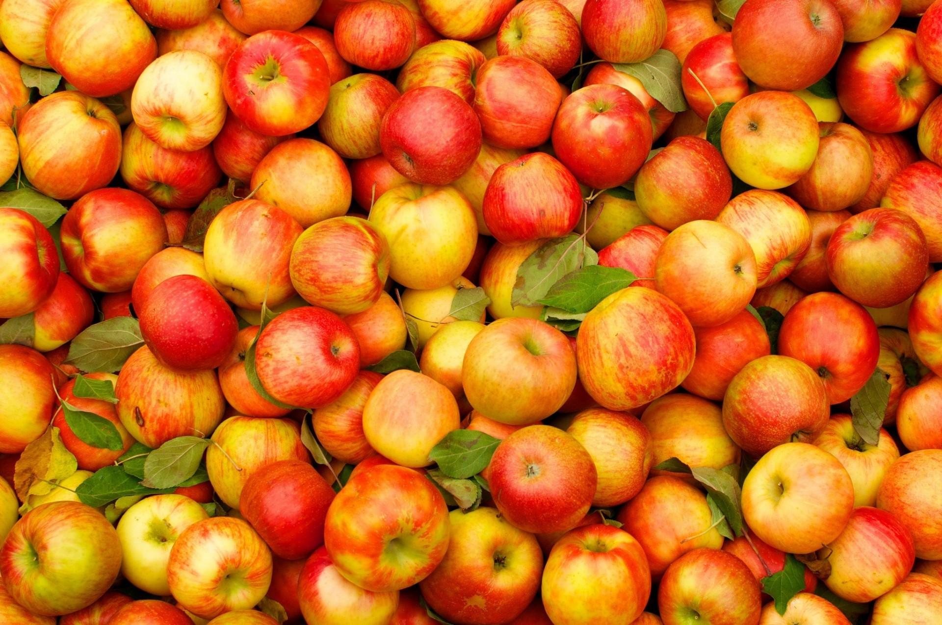 denies apples plea - HD1920×1200