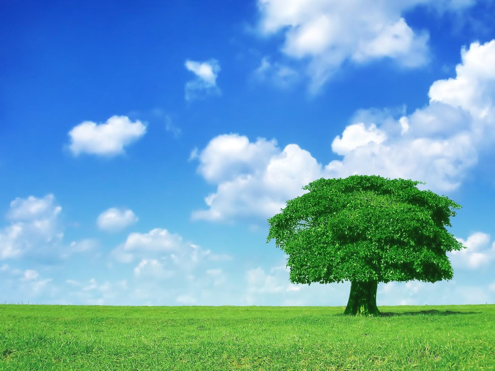 дерево поле  № 439068 бесплатно