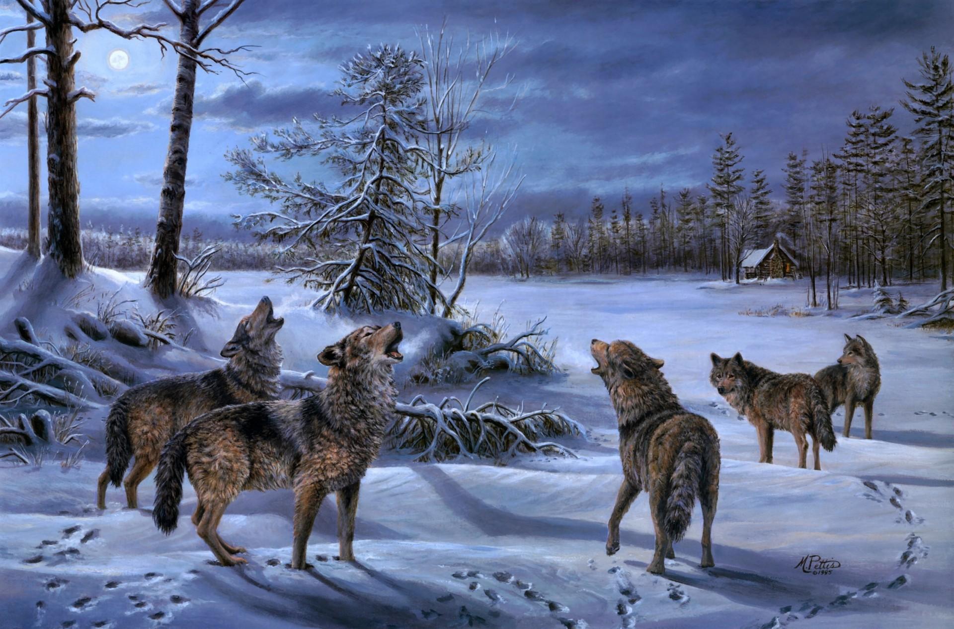 фото волков на ночной охоте которыми планировалось использование