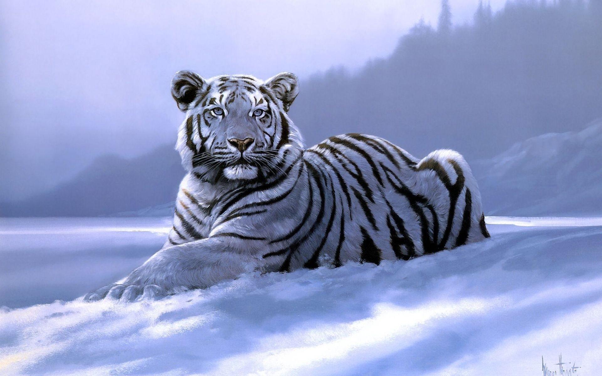 Белые тигры картинки, для учителя выпускной