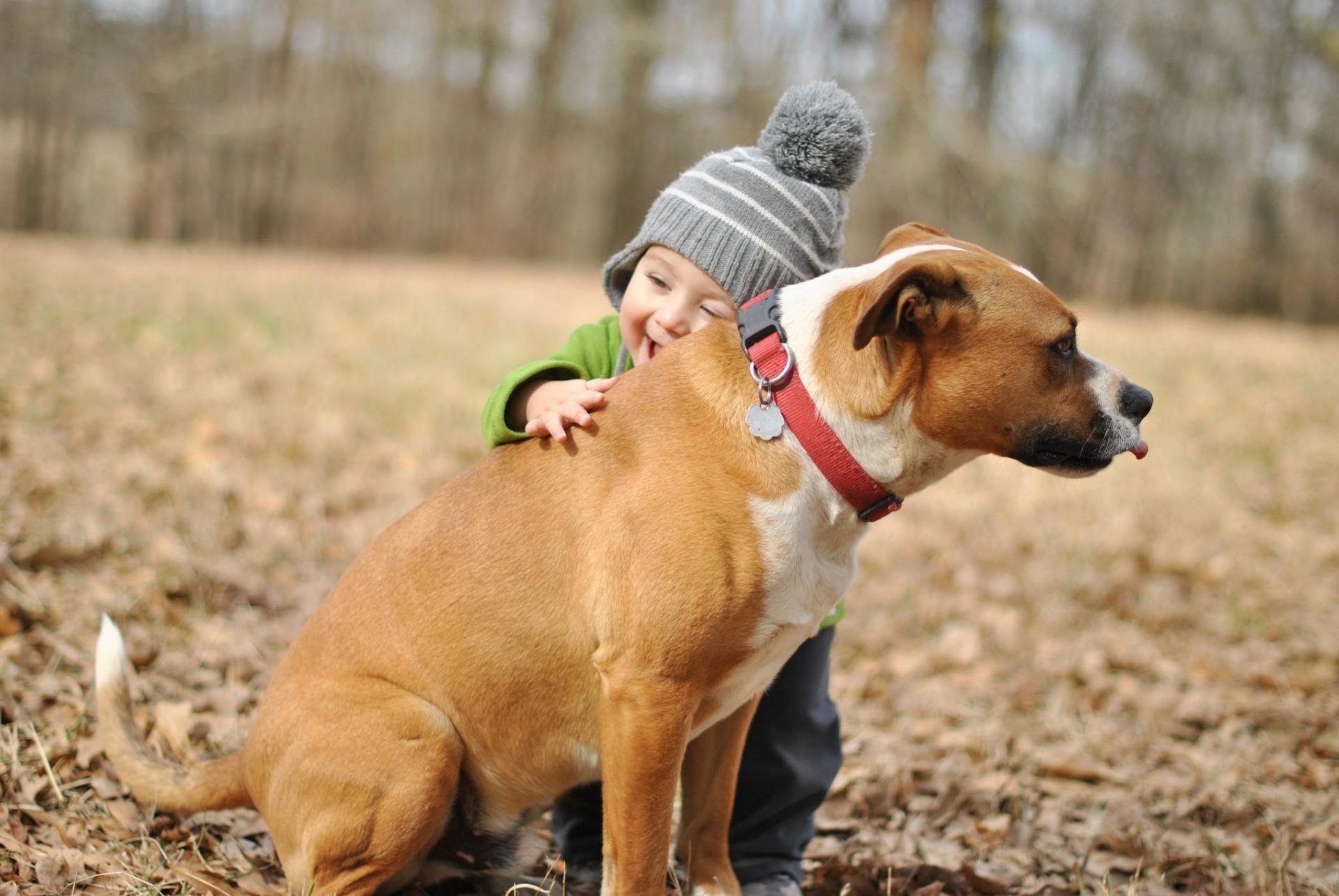 Собака ребенок  № 2980035  скачать
