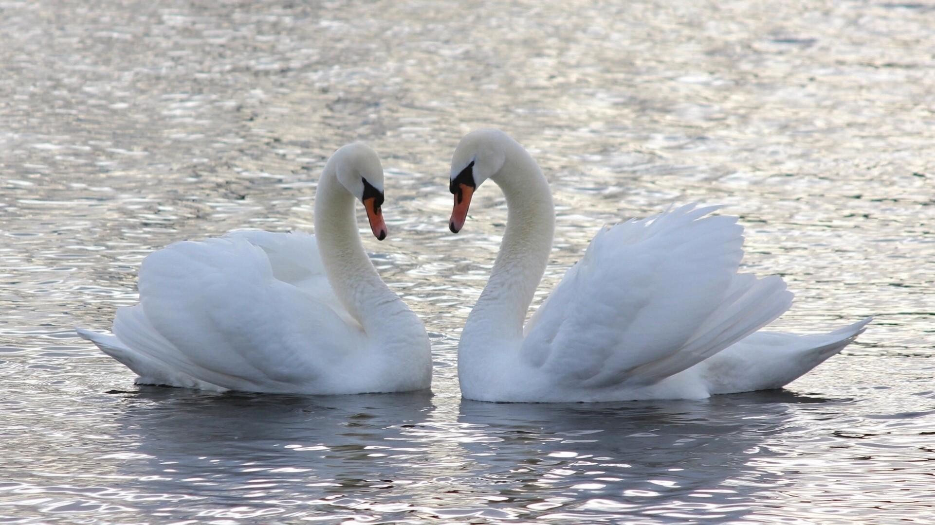 любовь столик озеро пара love table the lake pair без смс