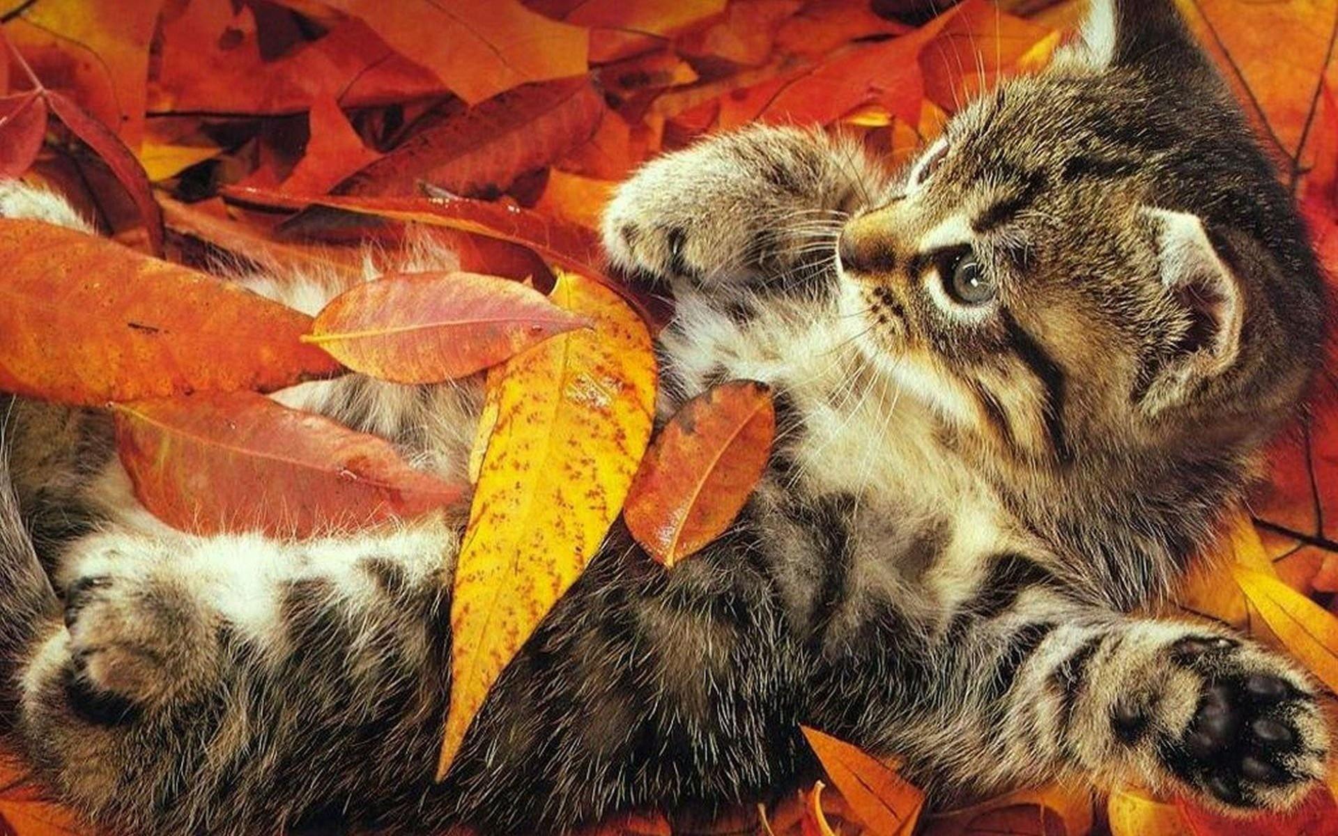 кошка осень листва  № 3898507 без смс
