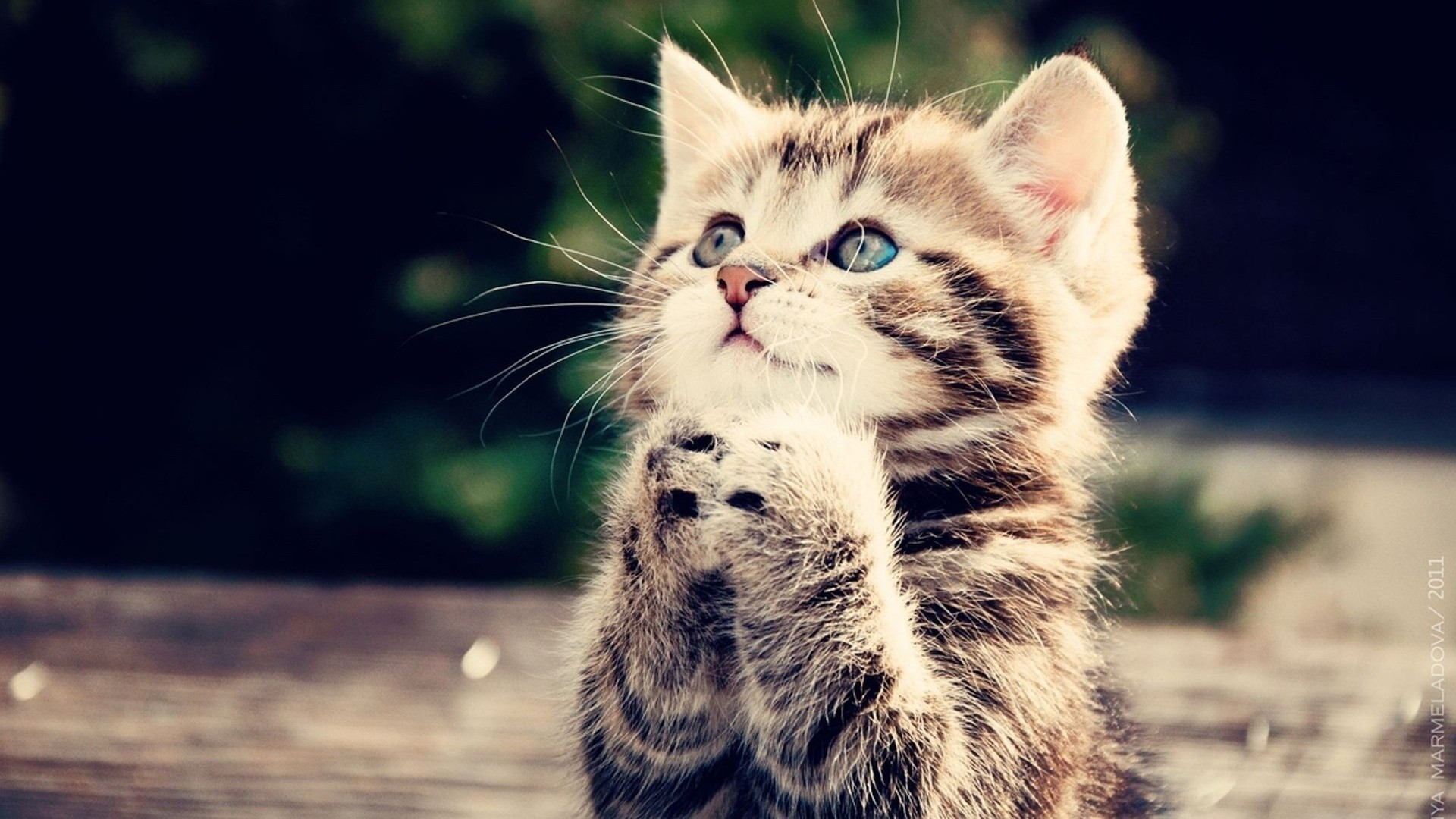 милые коты фото картинки
