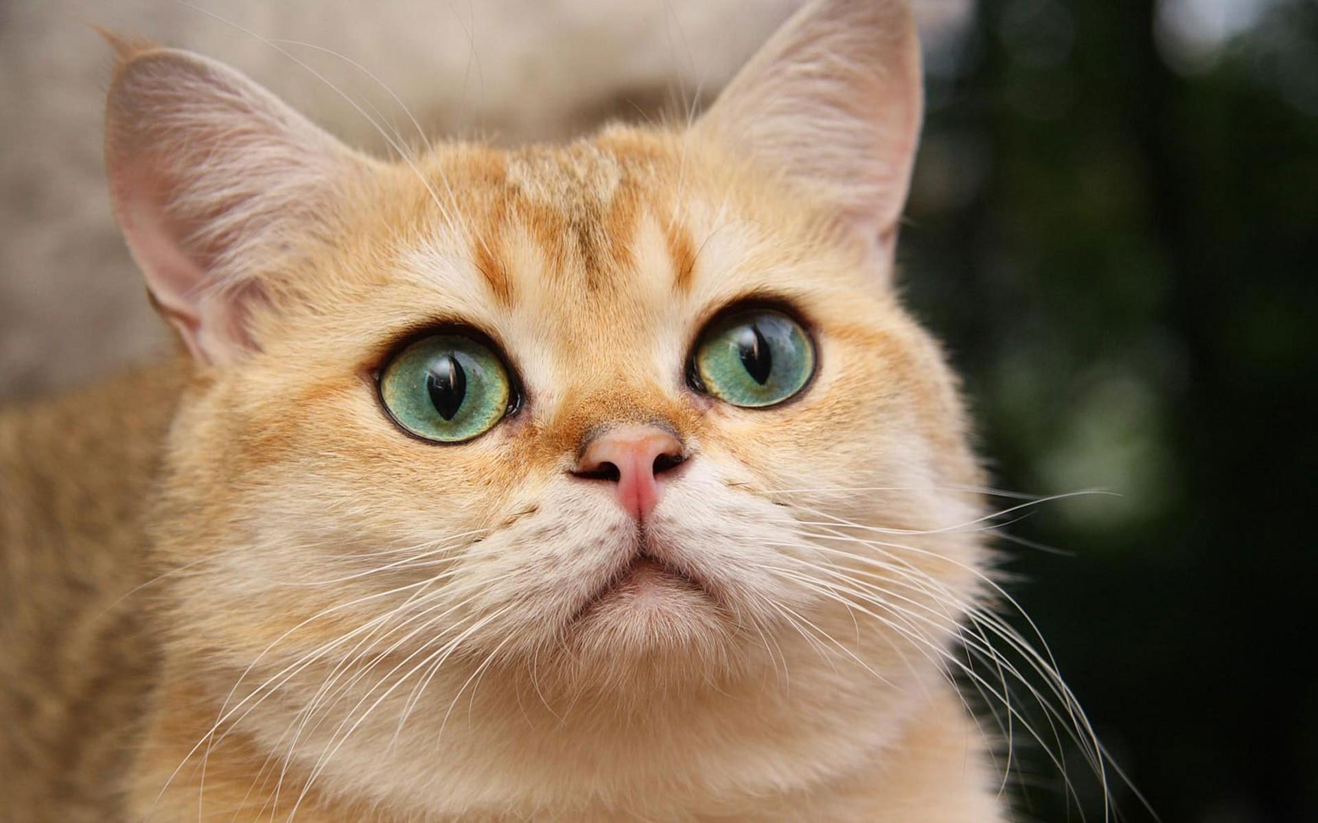 197Что делать когда у кошки красный глаз