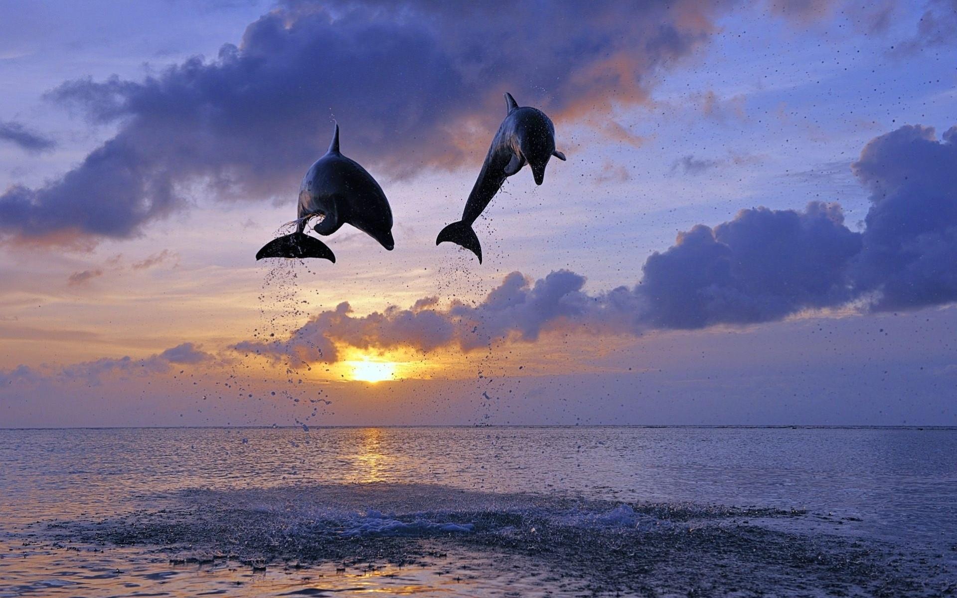 Дельфин обои на рабочий стол высокого качества 7