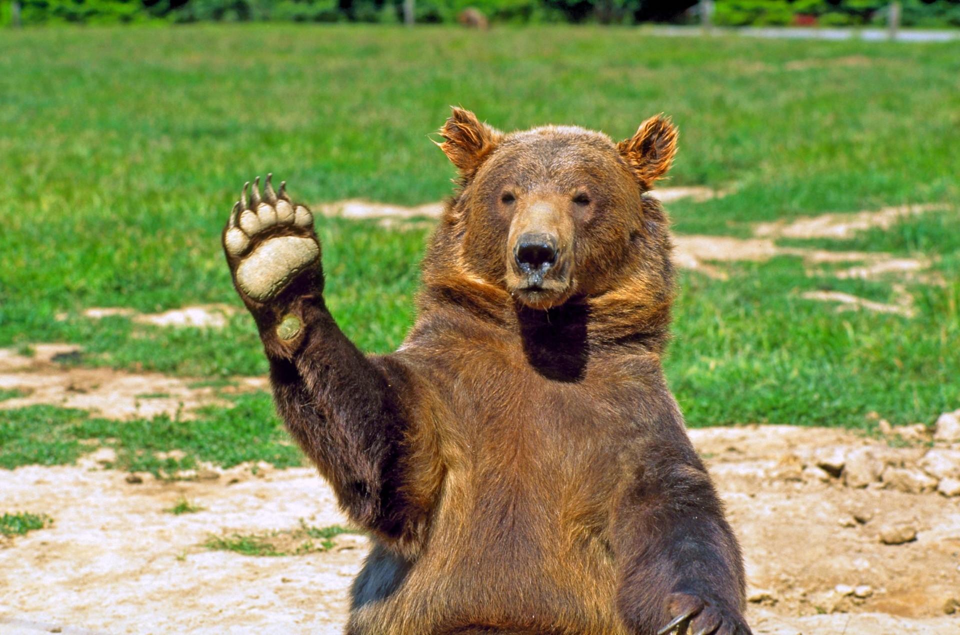 поправила медвежата картинки привет первый раз забирает