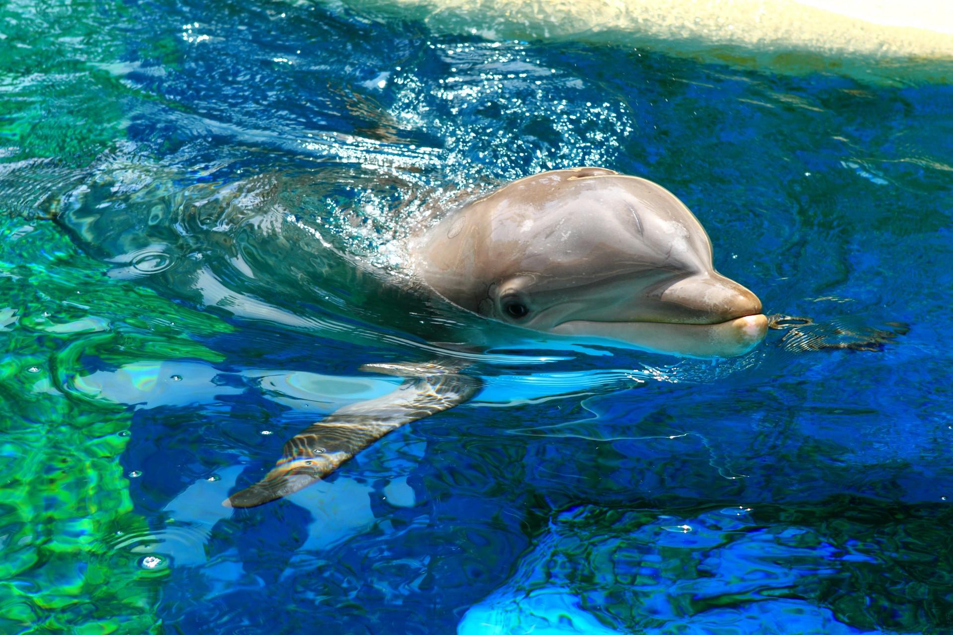 картинки с дельфинами под водой жизнь