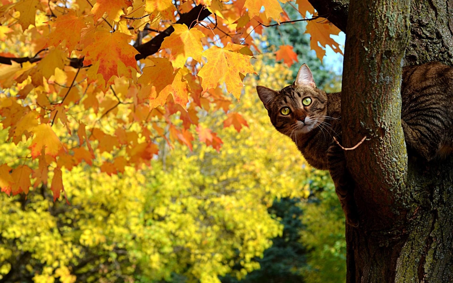 Прикольные картинки осень золотая, фото открытки