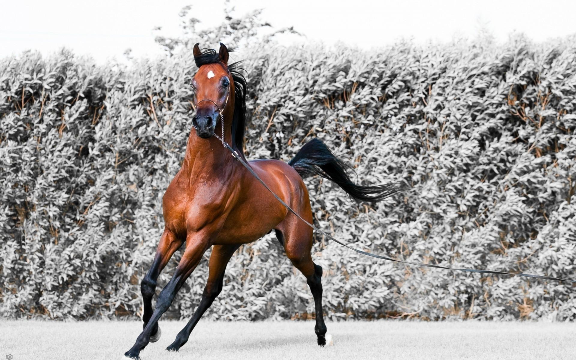 большая ошибка, картинка уходящей лошади номер повышенной