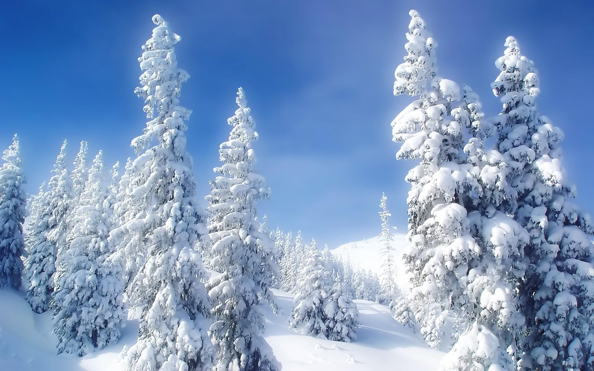 Сделать открытки, зимний лес гифка