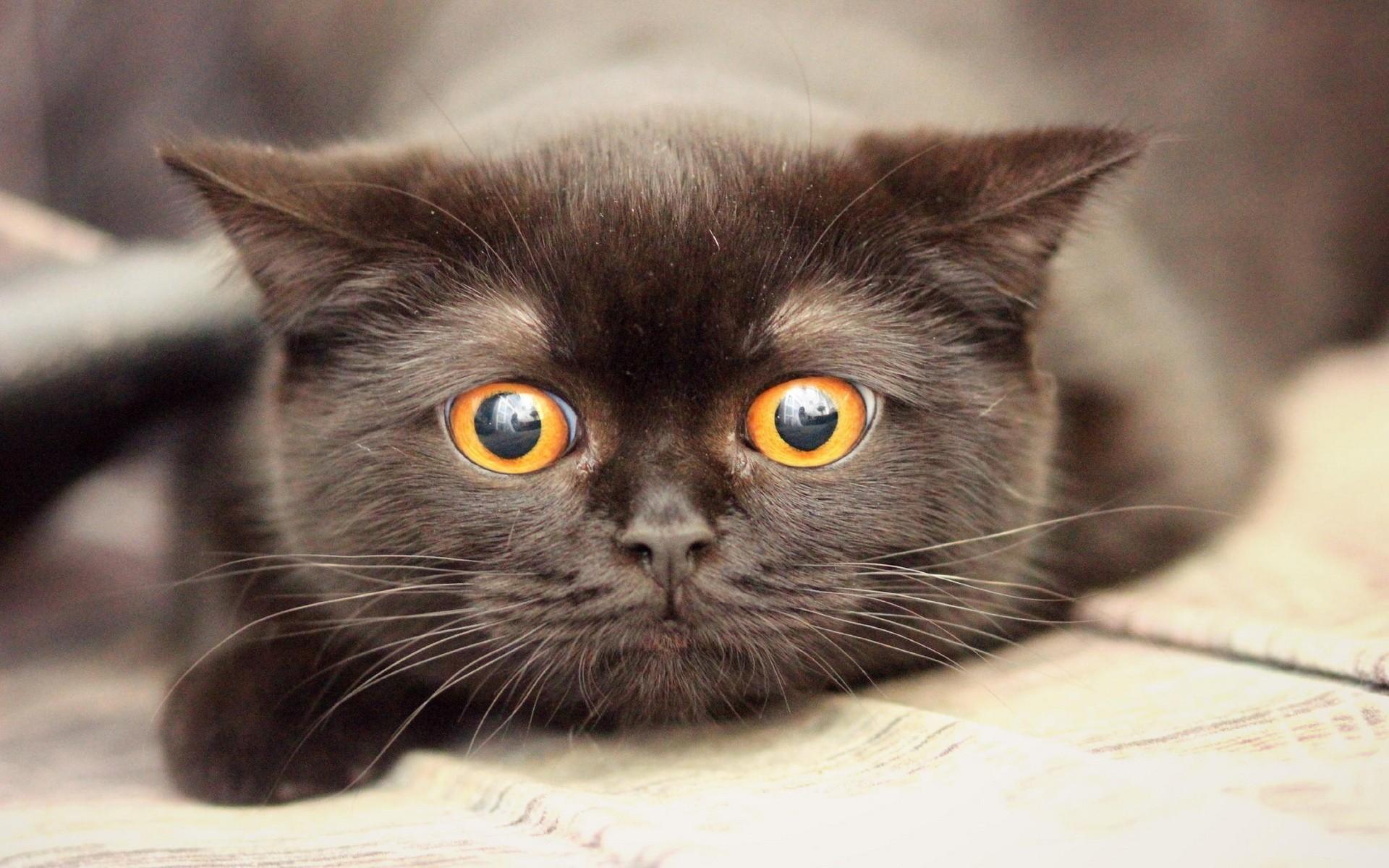 Картинки смешных котов черных