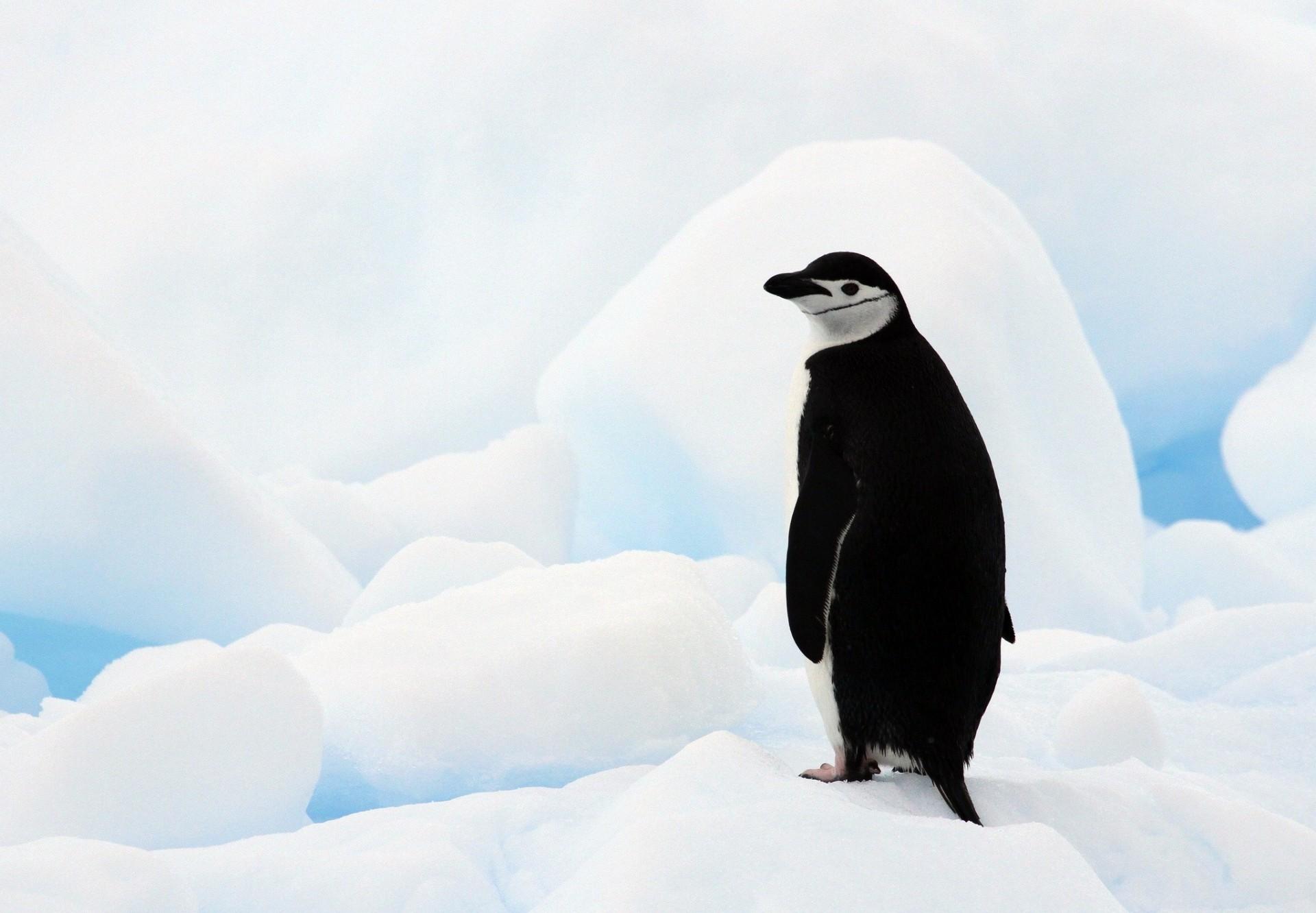 пингвины на глыбе льда  № 91306 загрузить