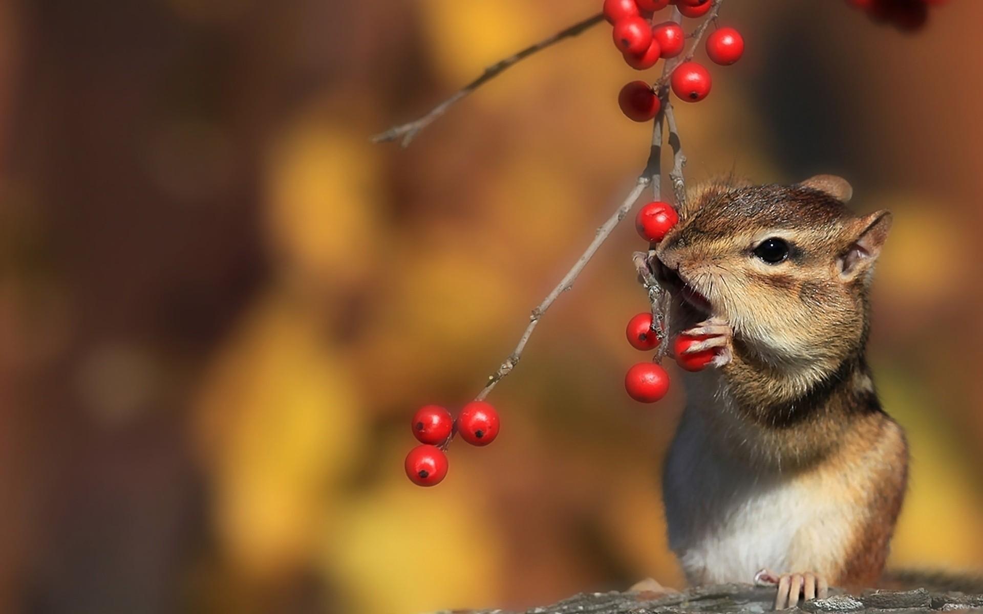 Картинки осень с животными красивые и смешные, поздравление фотографиями новый