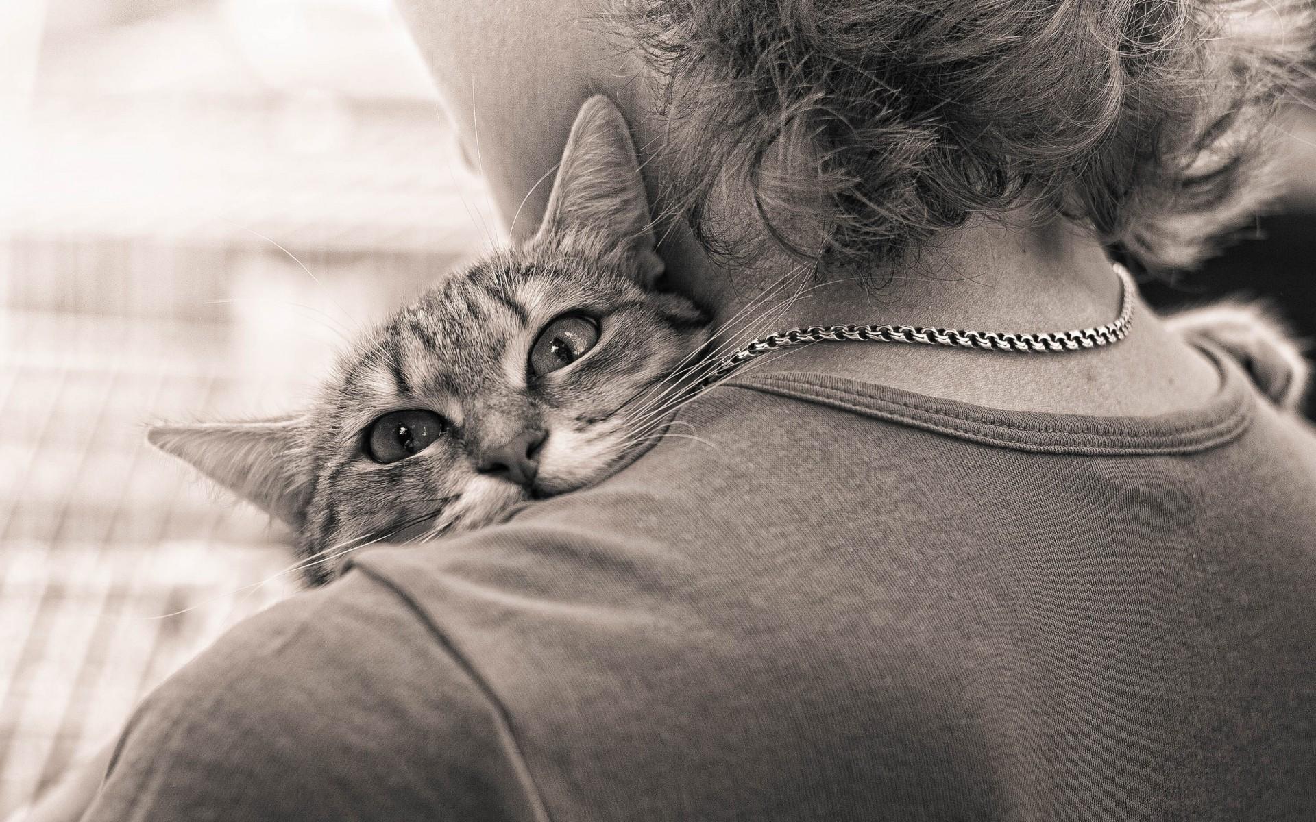 Кот обнимает девушку картинки
