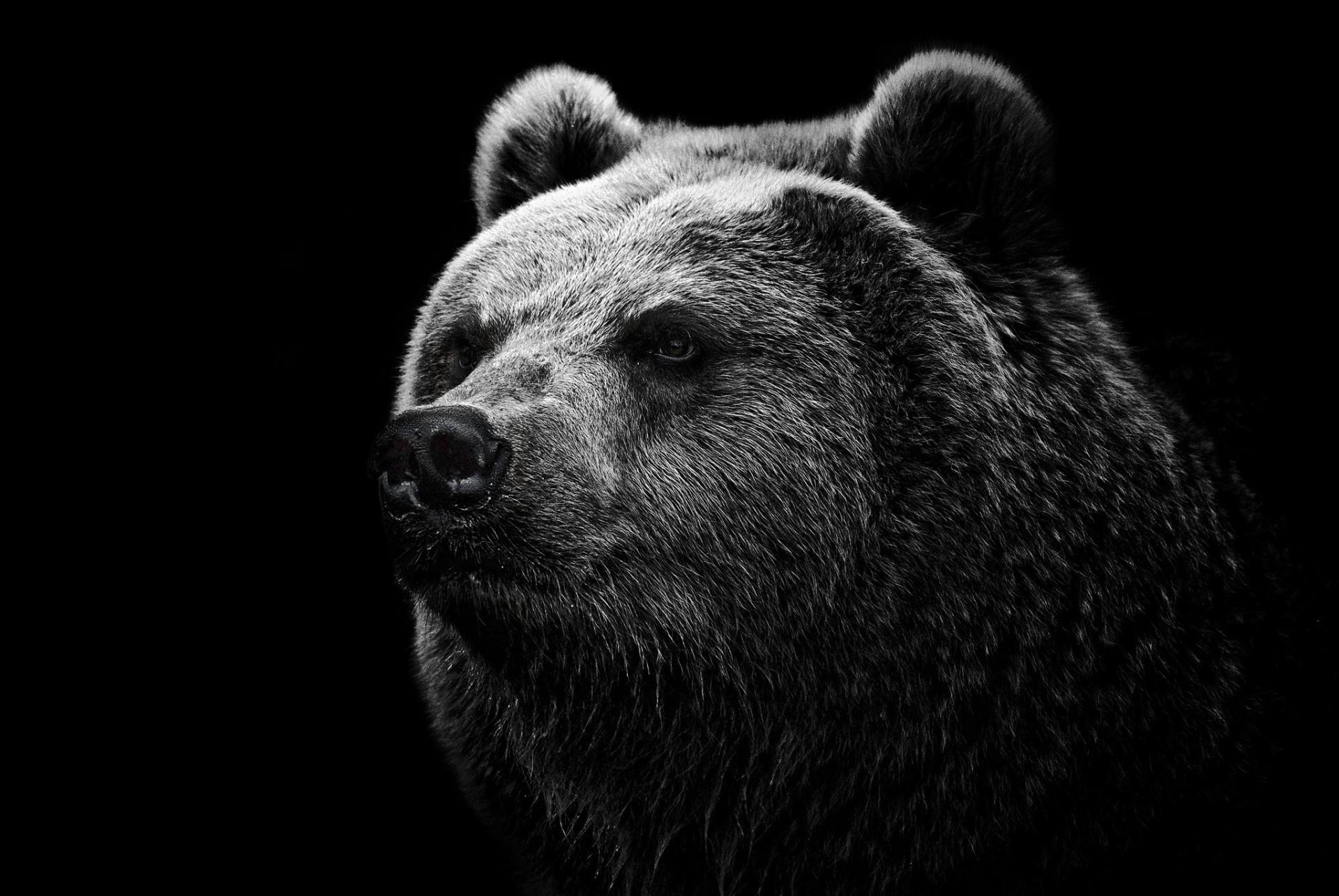 Картинки медведь на черном фоне