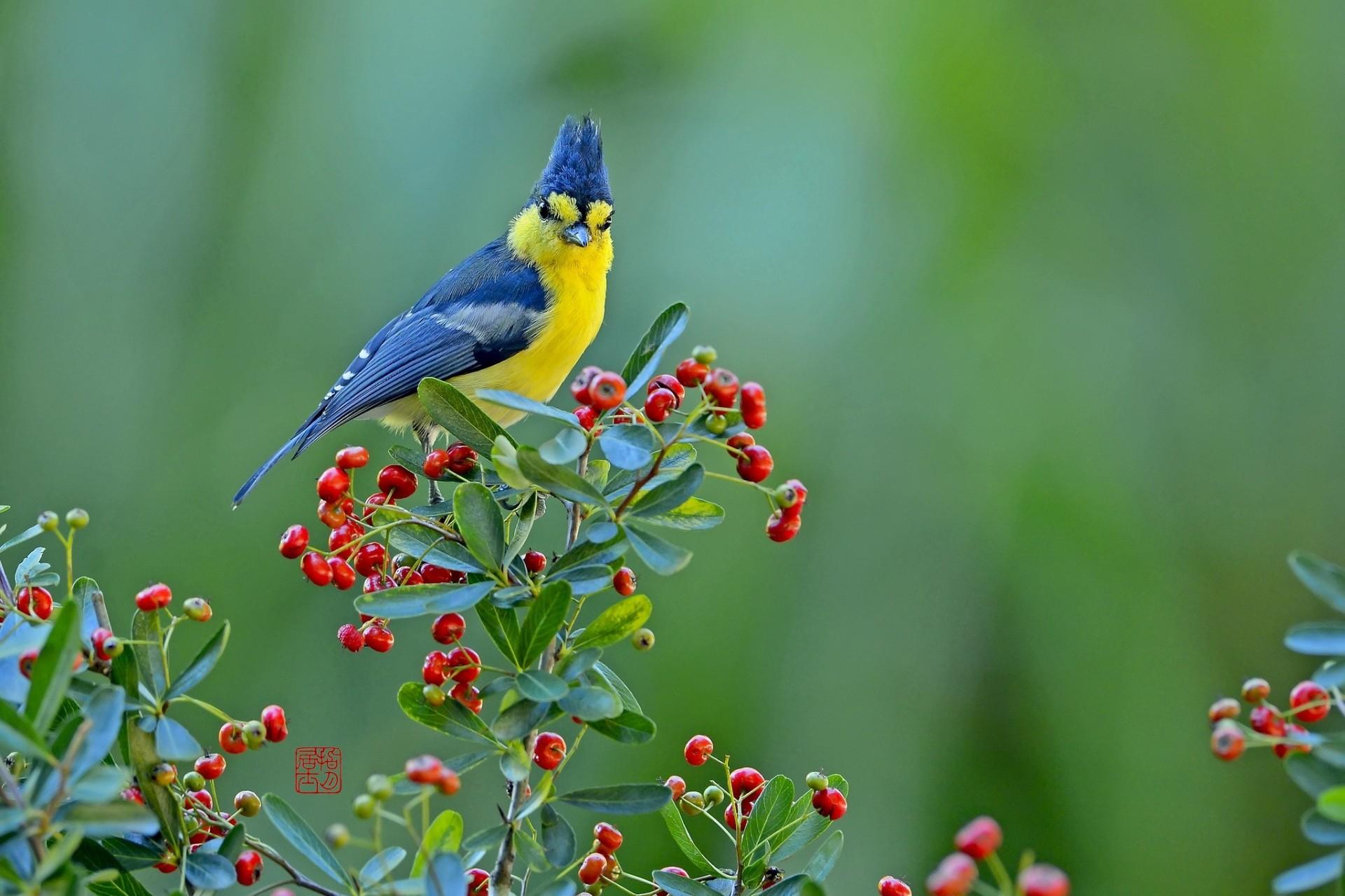 виниловые птицы на природе красивые благодарят