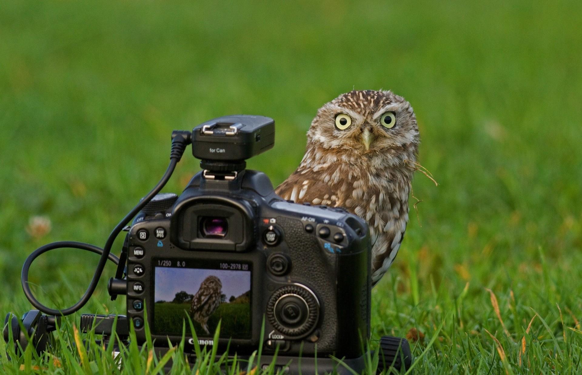 Фотоаппарат картинки прикольные, женщина