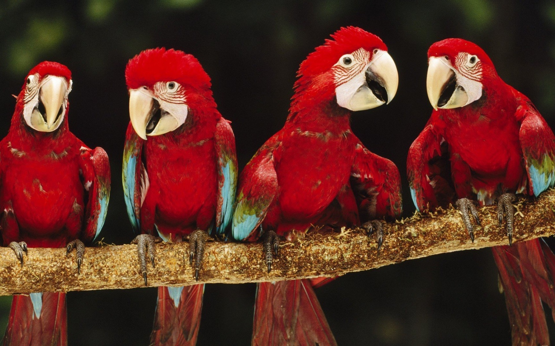 картинки четыре птицы костровые чаши