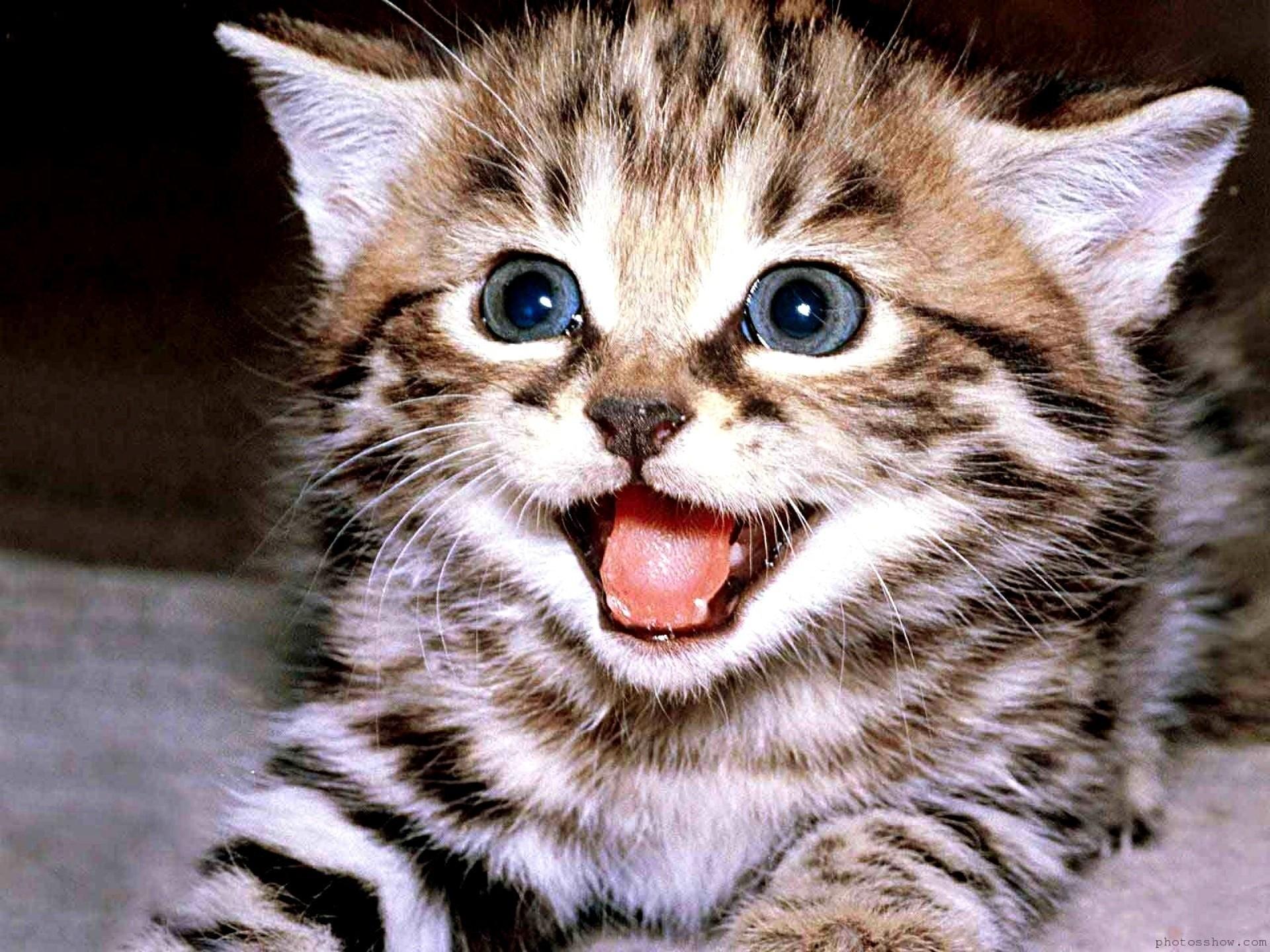fastest way to potty train a kitten