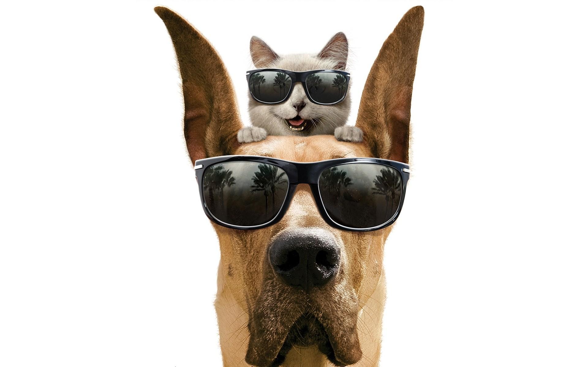 природа кот животное очки прикольное бесплатно