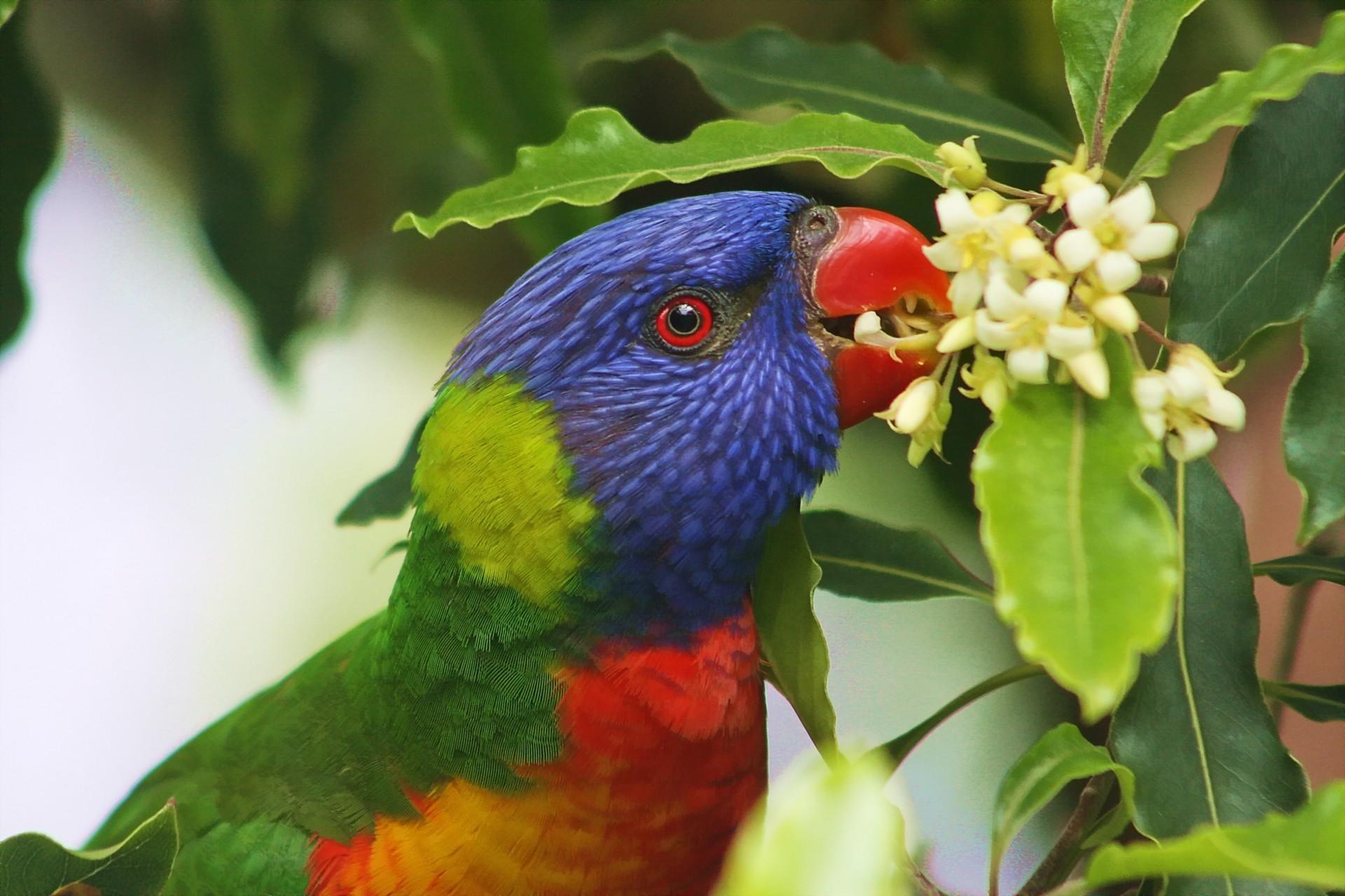 попугай макро деревья  № 737610 бесплатно