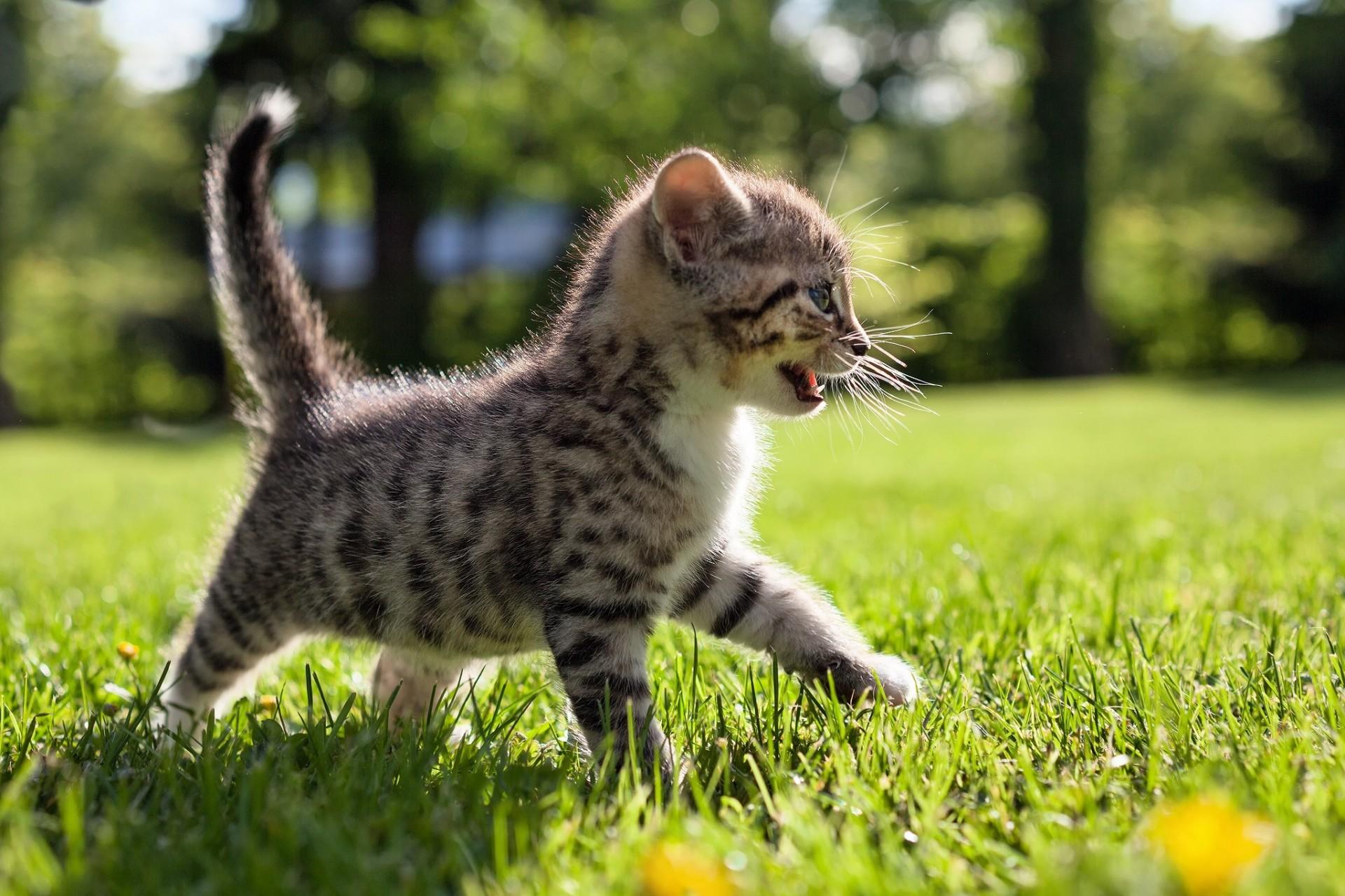 кошка солнце природа загрузить