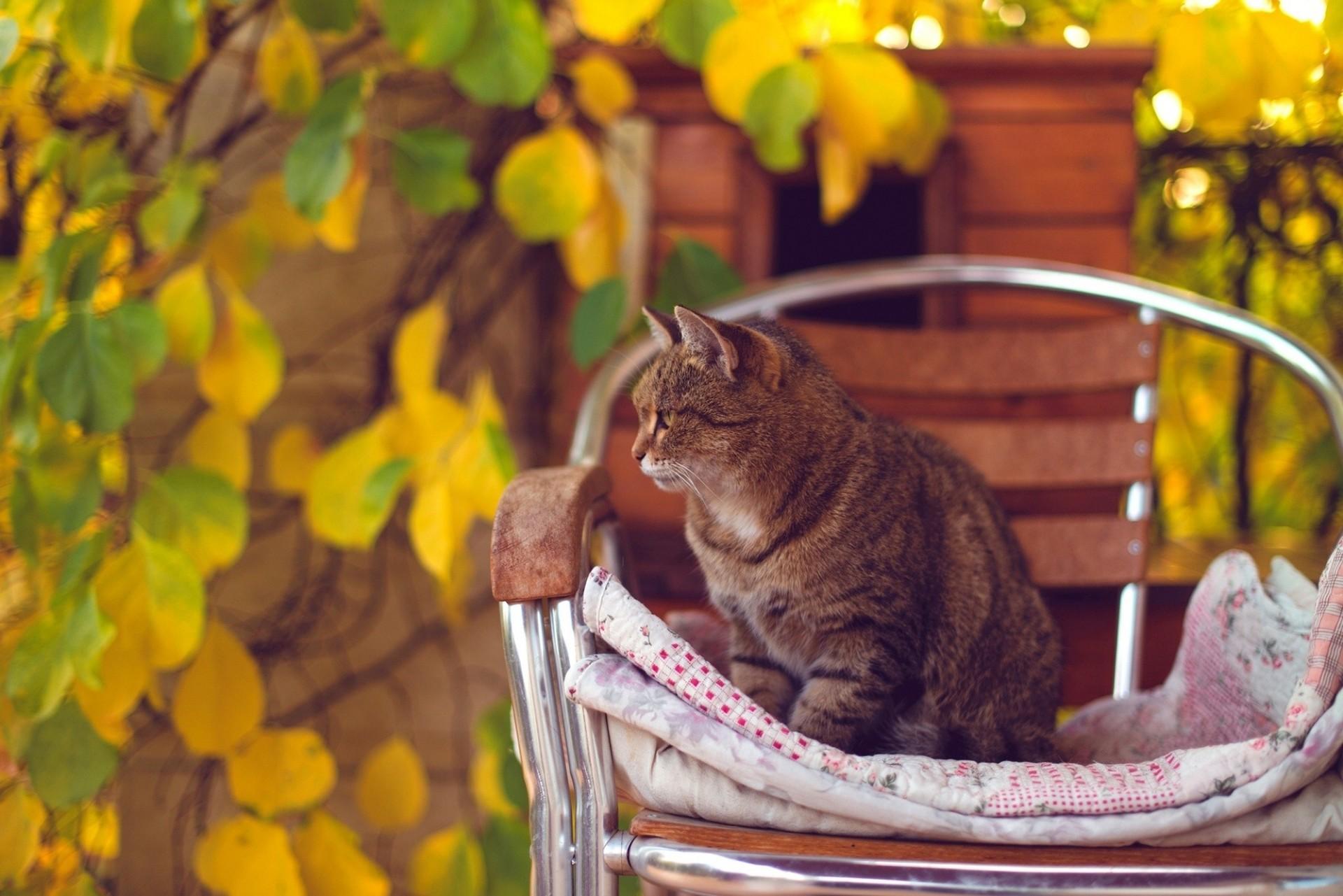 кот животное кресло морда  № 1943795 бесплатно