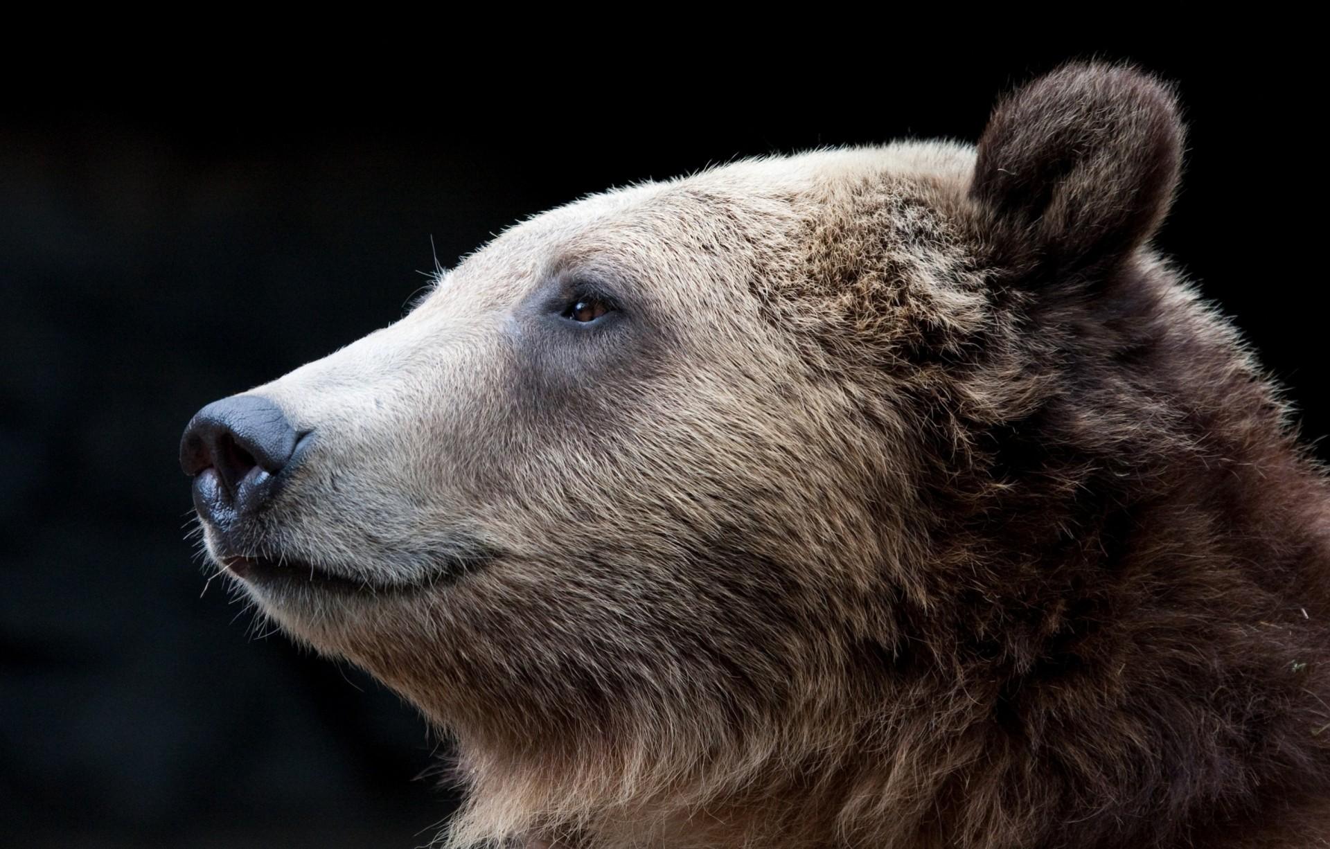 rupert bear and the san izal essay