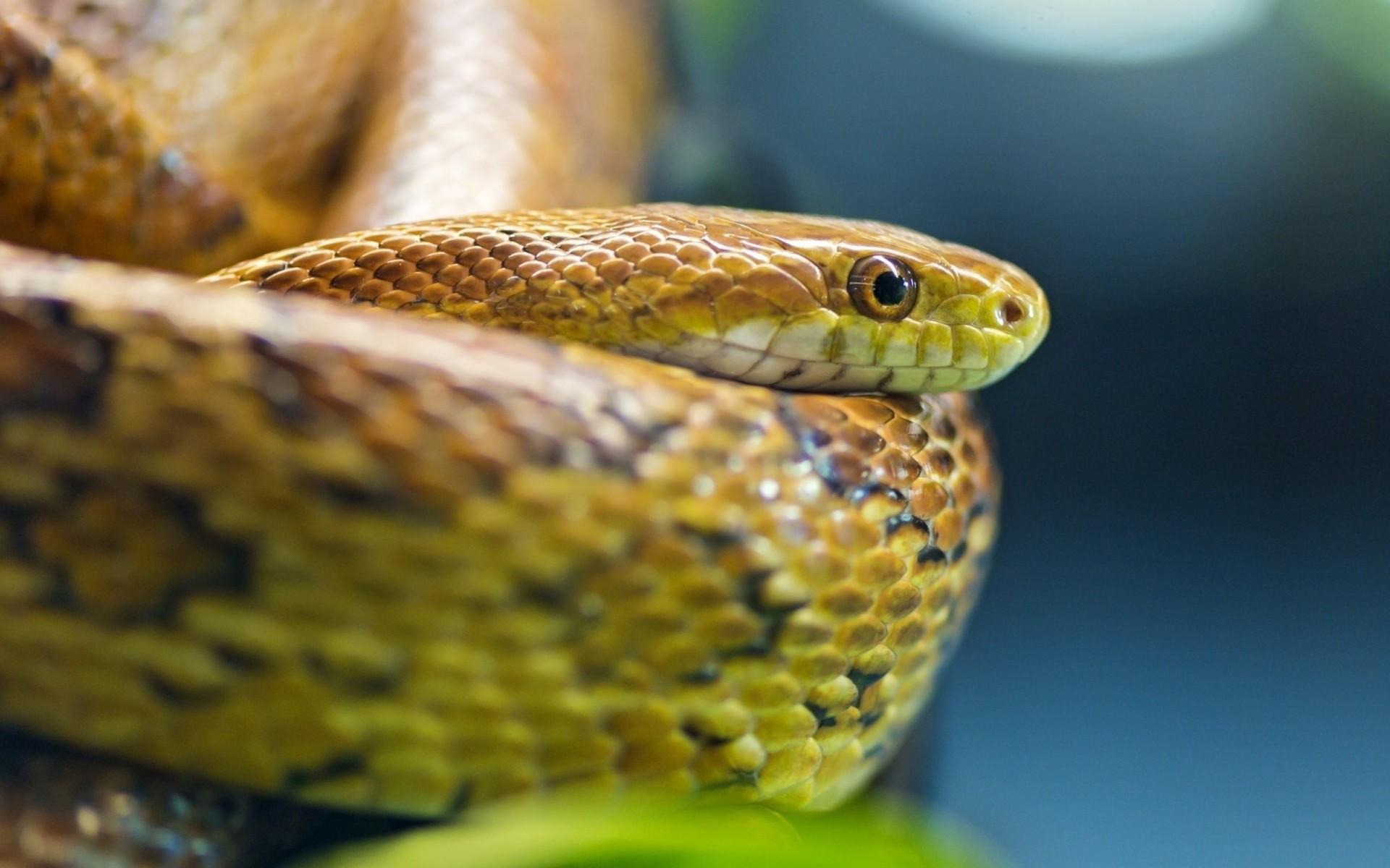 Змея на картинках, открытки днем