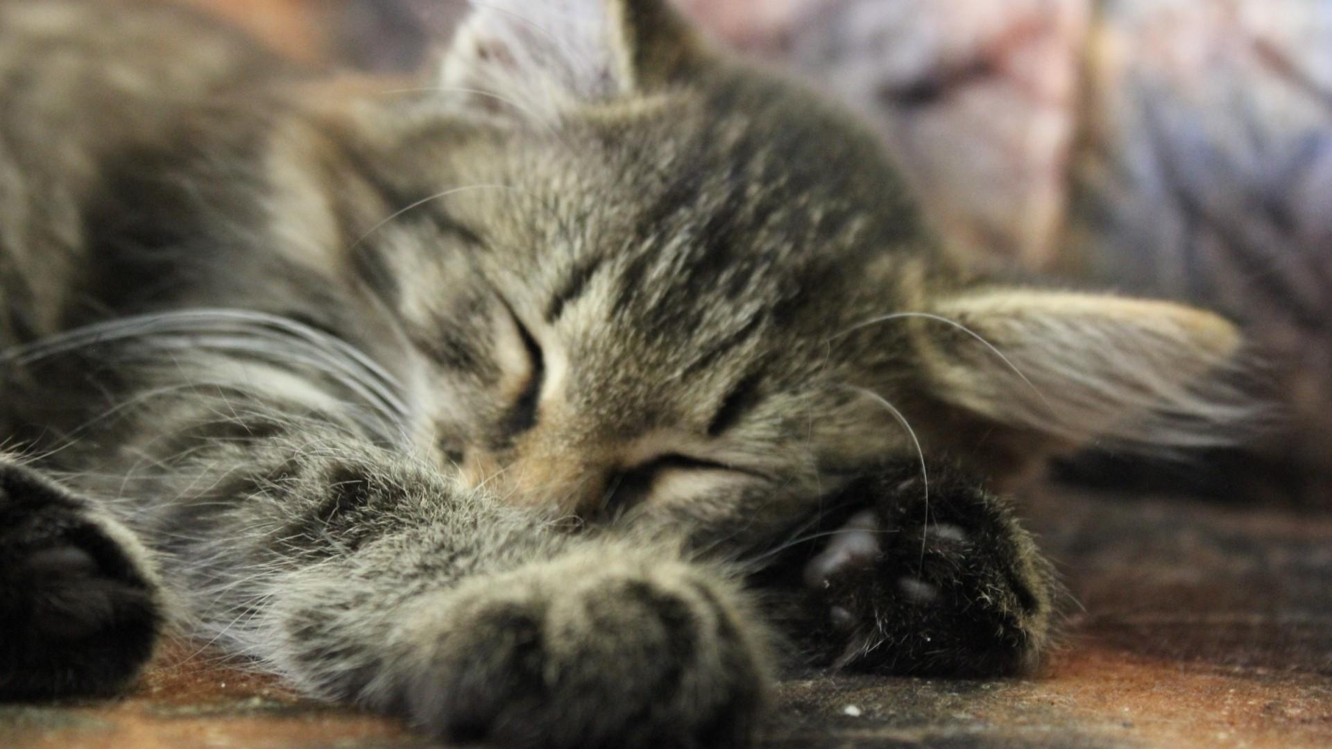 того фото спящие котята станция мцк