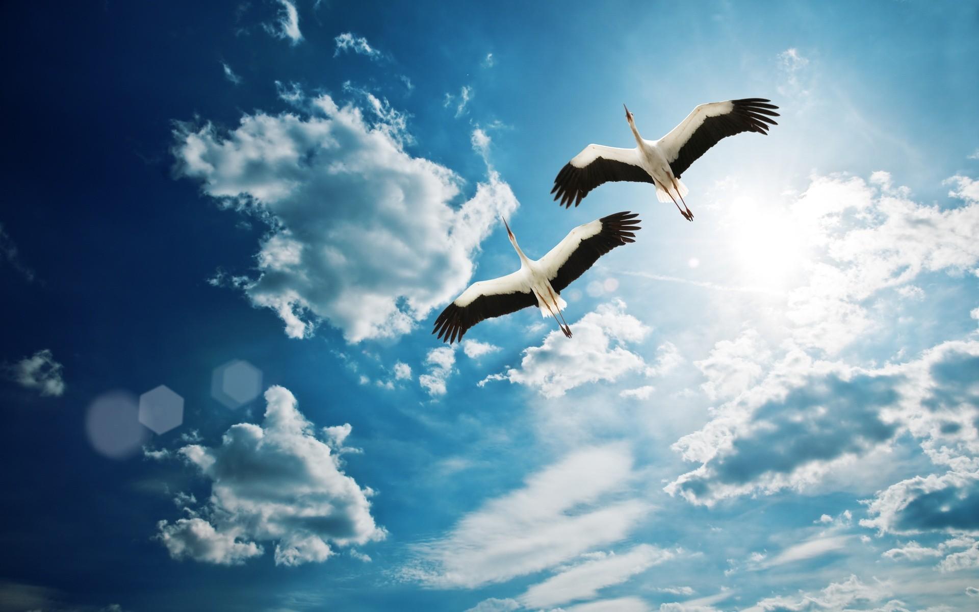 снимке картинки небо с птицами парами сайте слоеным салатам