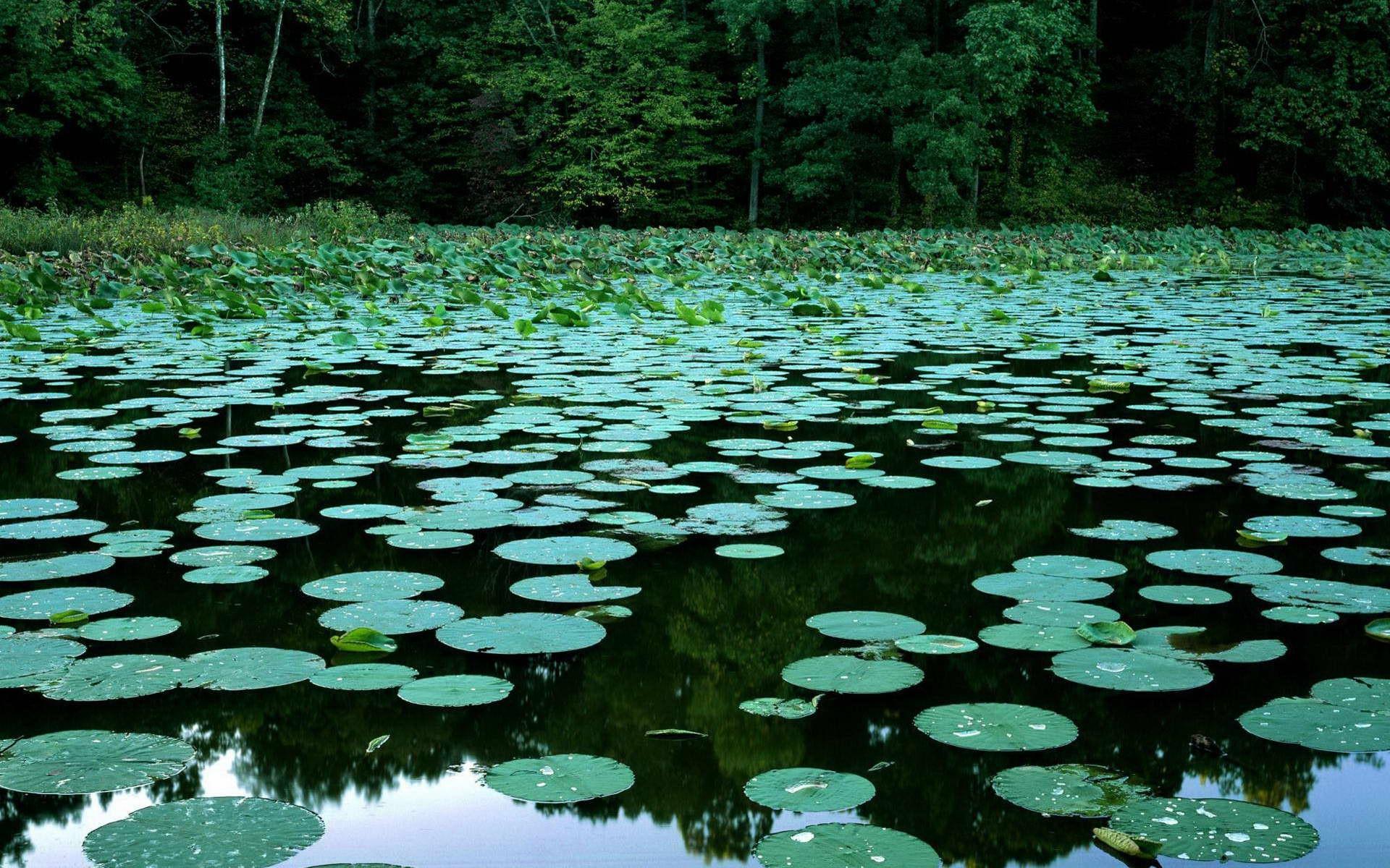 Кувшинки в синем озере скачать