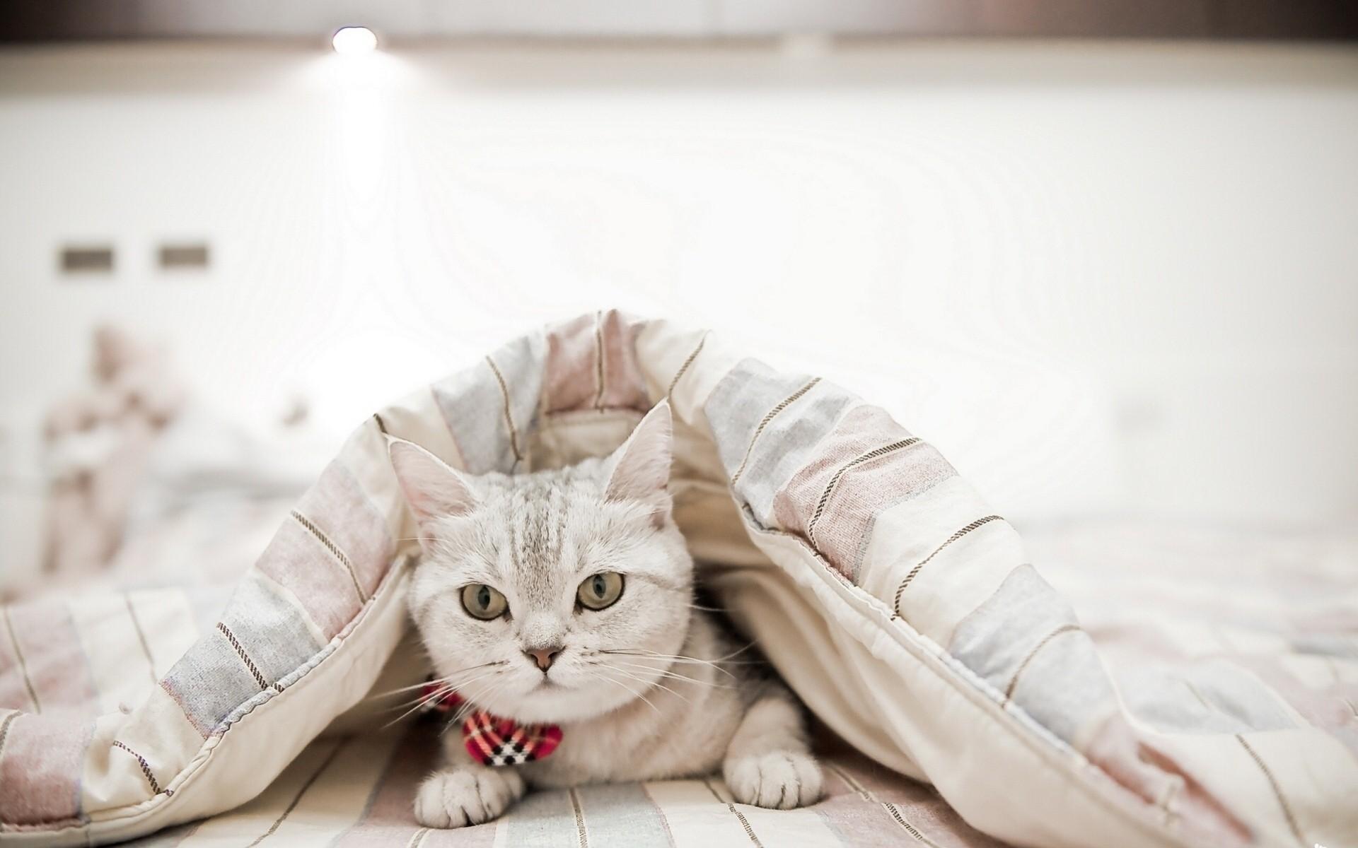 котенок в одеяле бесплатно