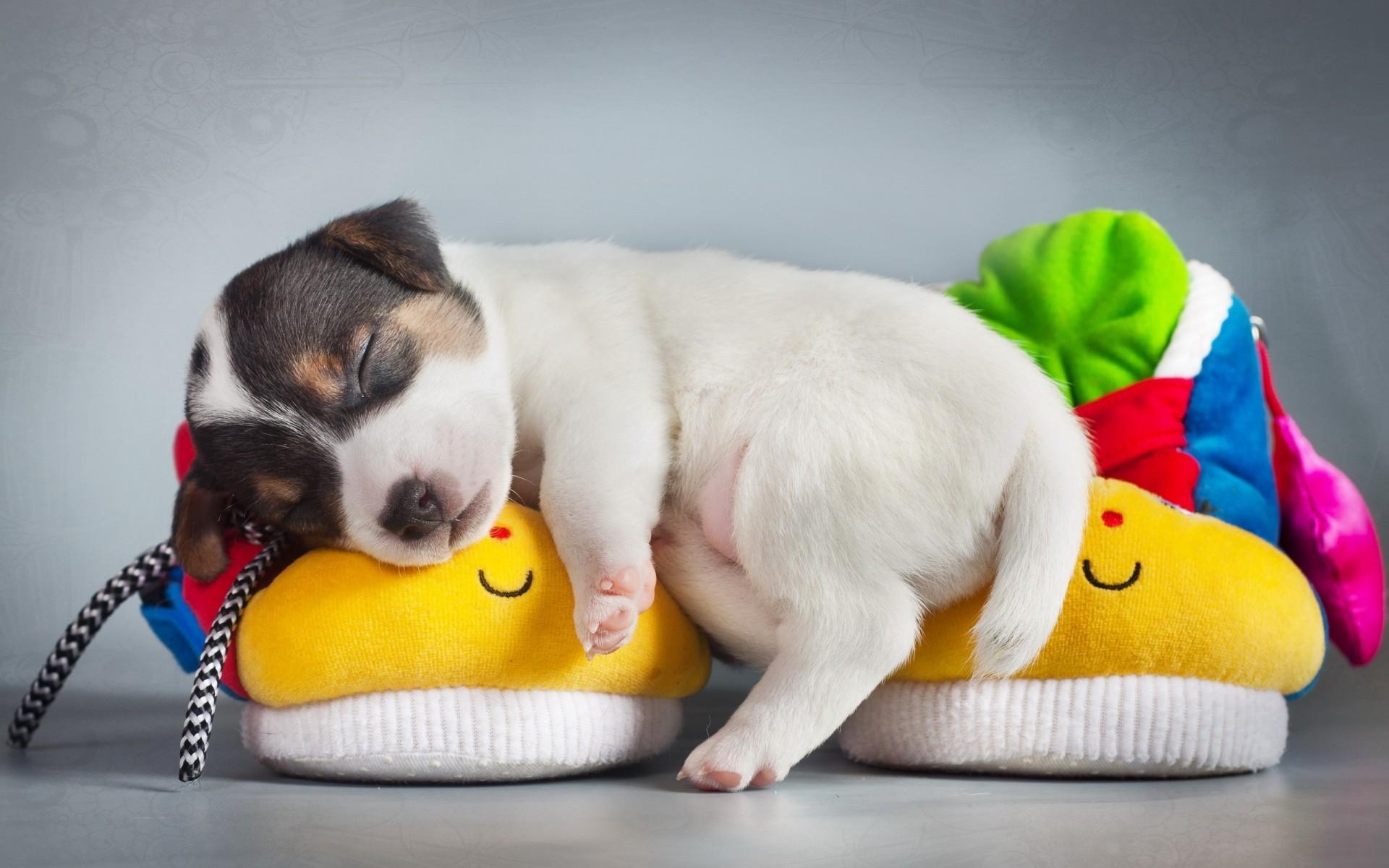 собака спит на обуви Дебильная девочка